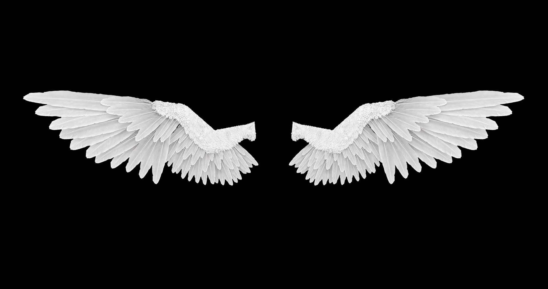 White angel wings with an alpha channel Motion Background - Videoblocks