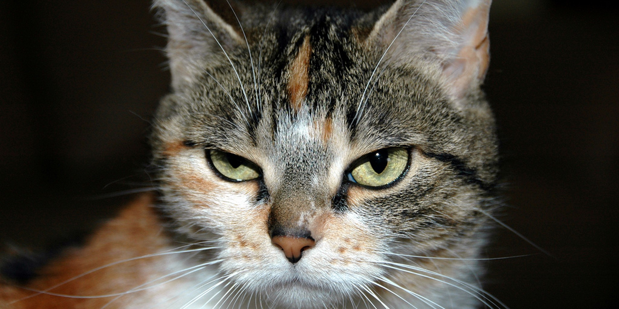 Man calls 911 when his angry cat won't let him into his house | The ...