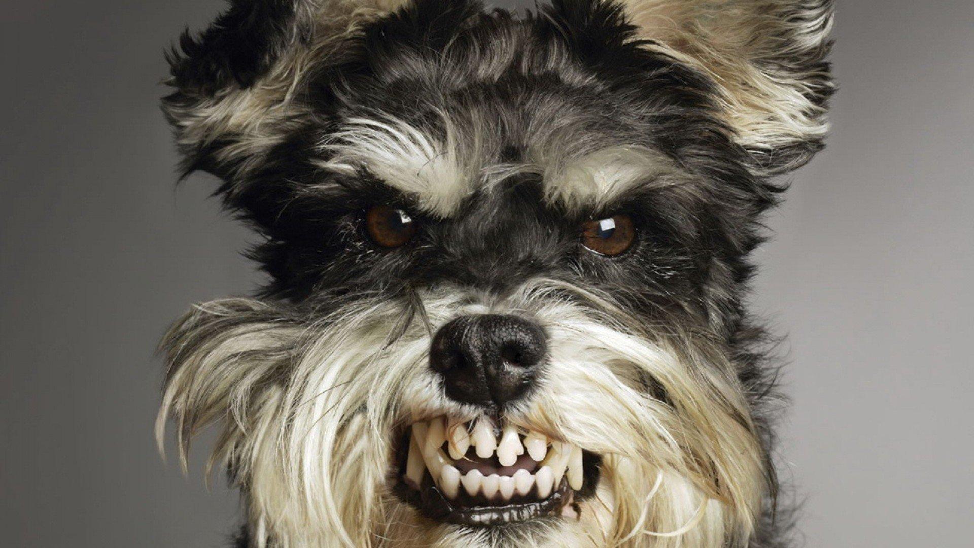 Angry dog photo