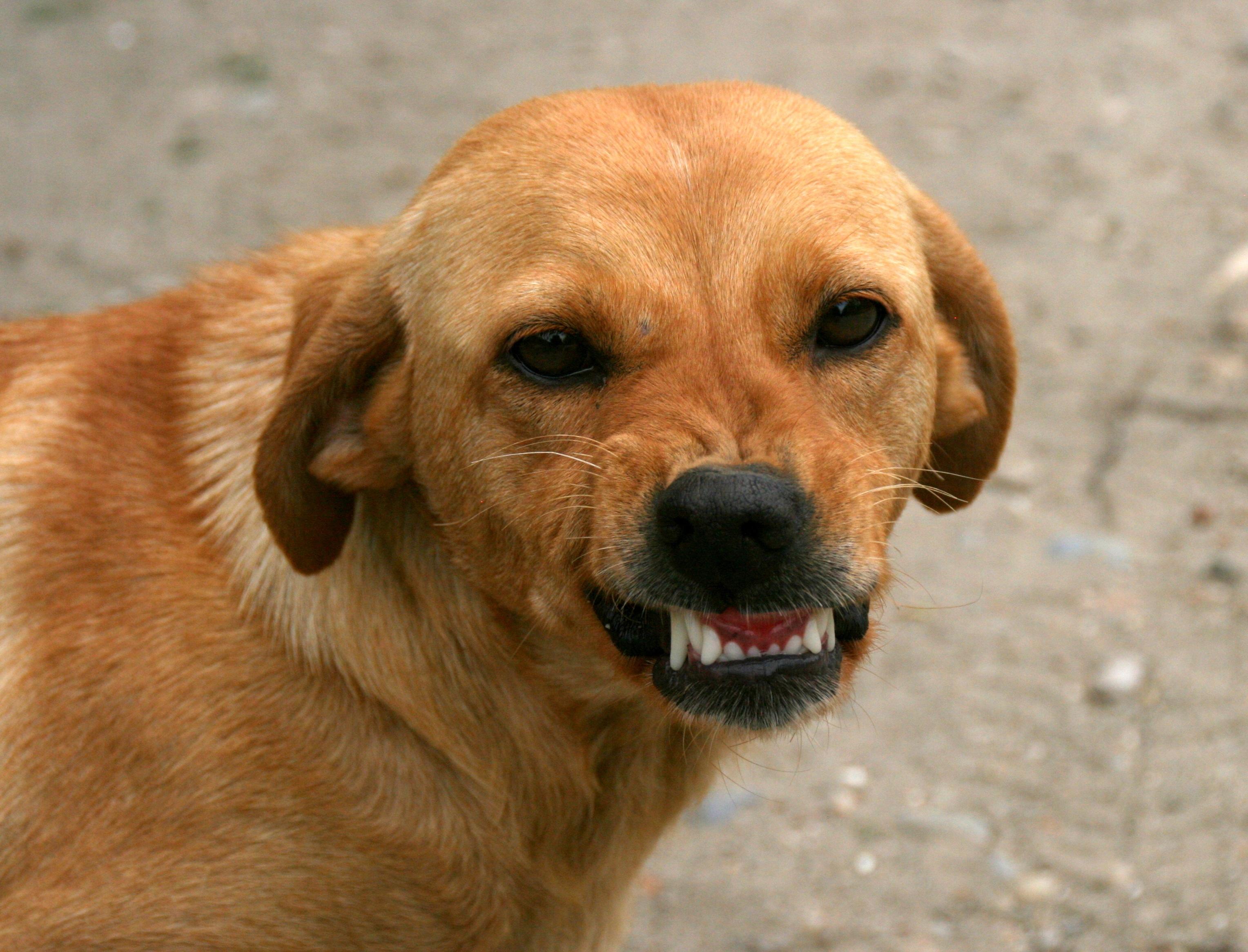 Iso Dog Food