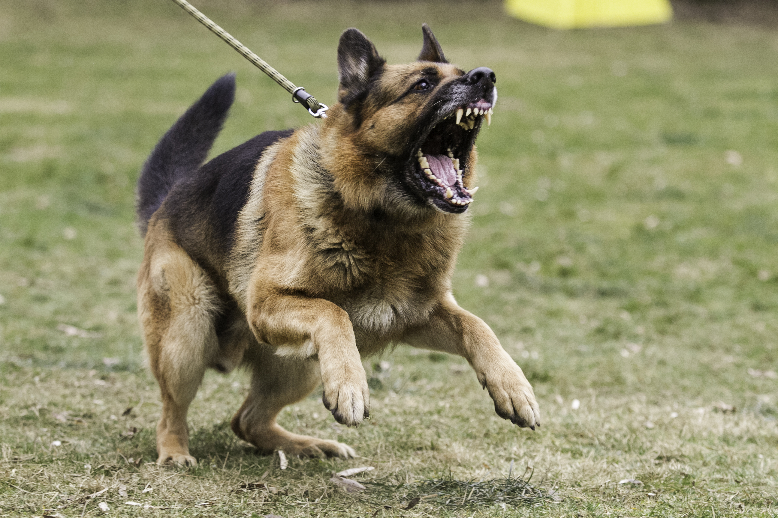 Texas Leads The Nation in the Number of Fatal Dog Bites