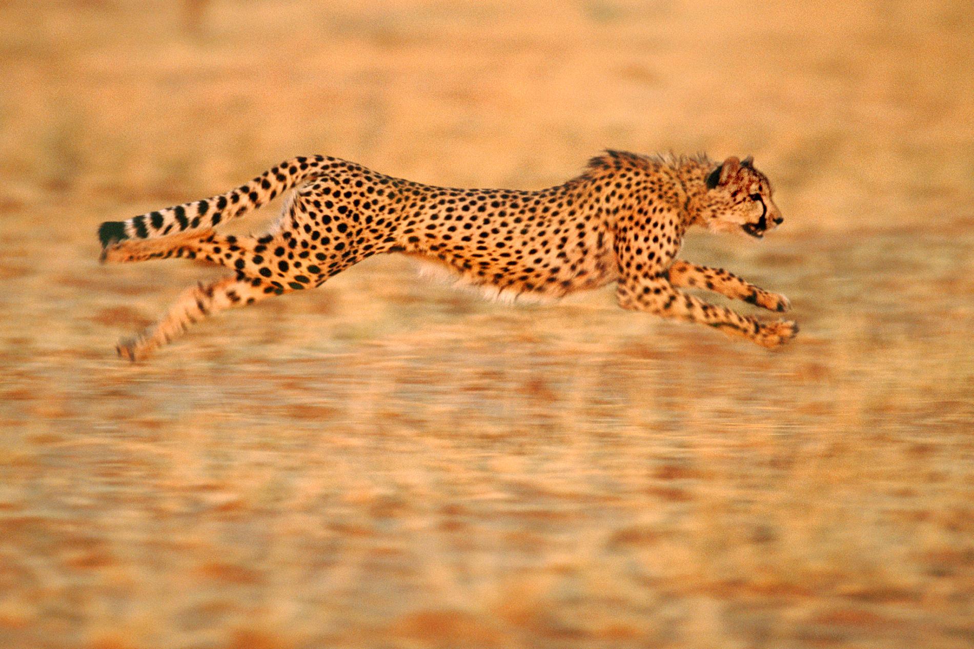 Animal photo
