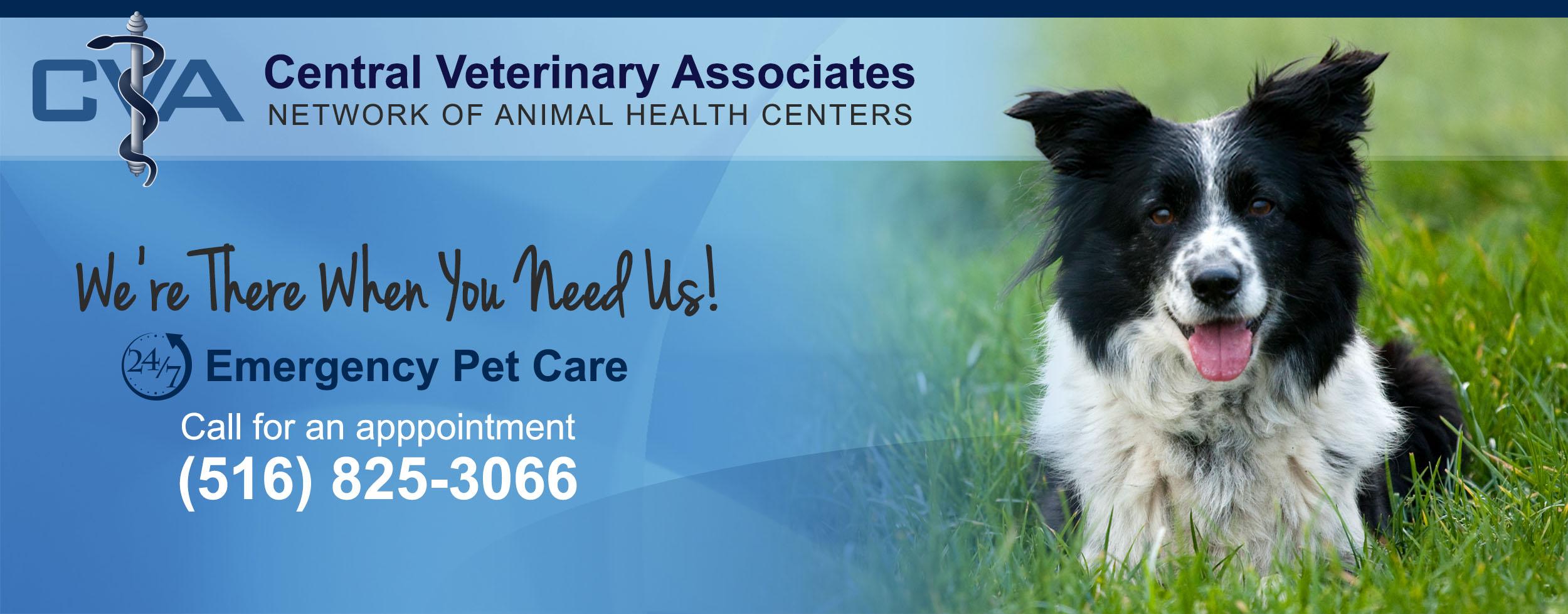 Rockaway Animal Clinic | Far Rockaway Veterinary Services | Queens, NY