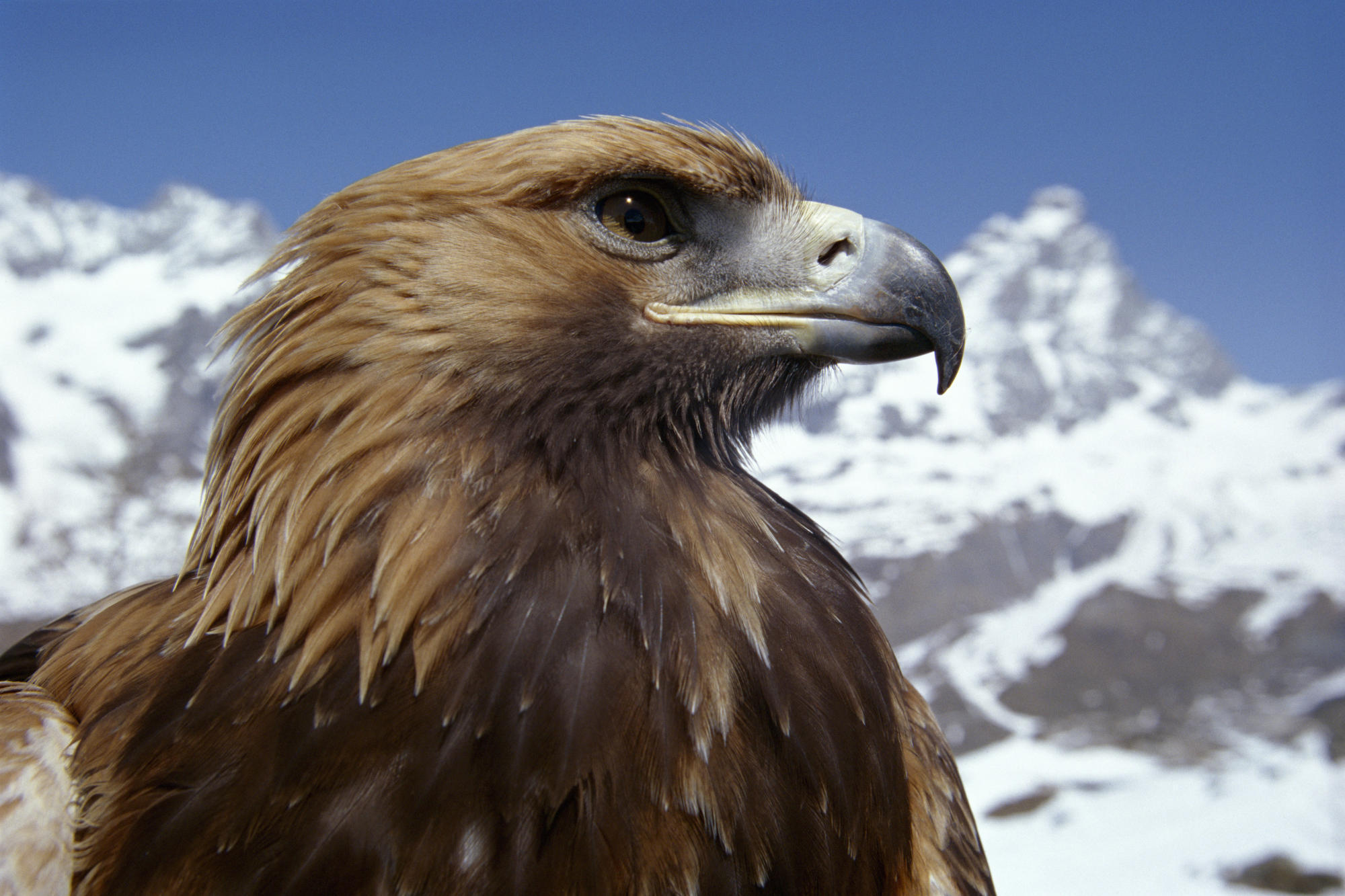 Animal Planet images Eagle HD wallpaper and background photos (3303078)