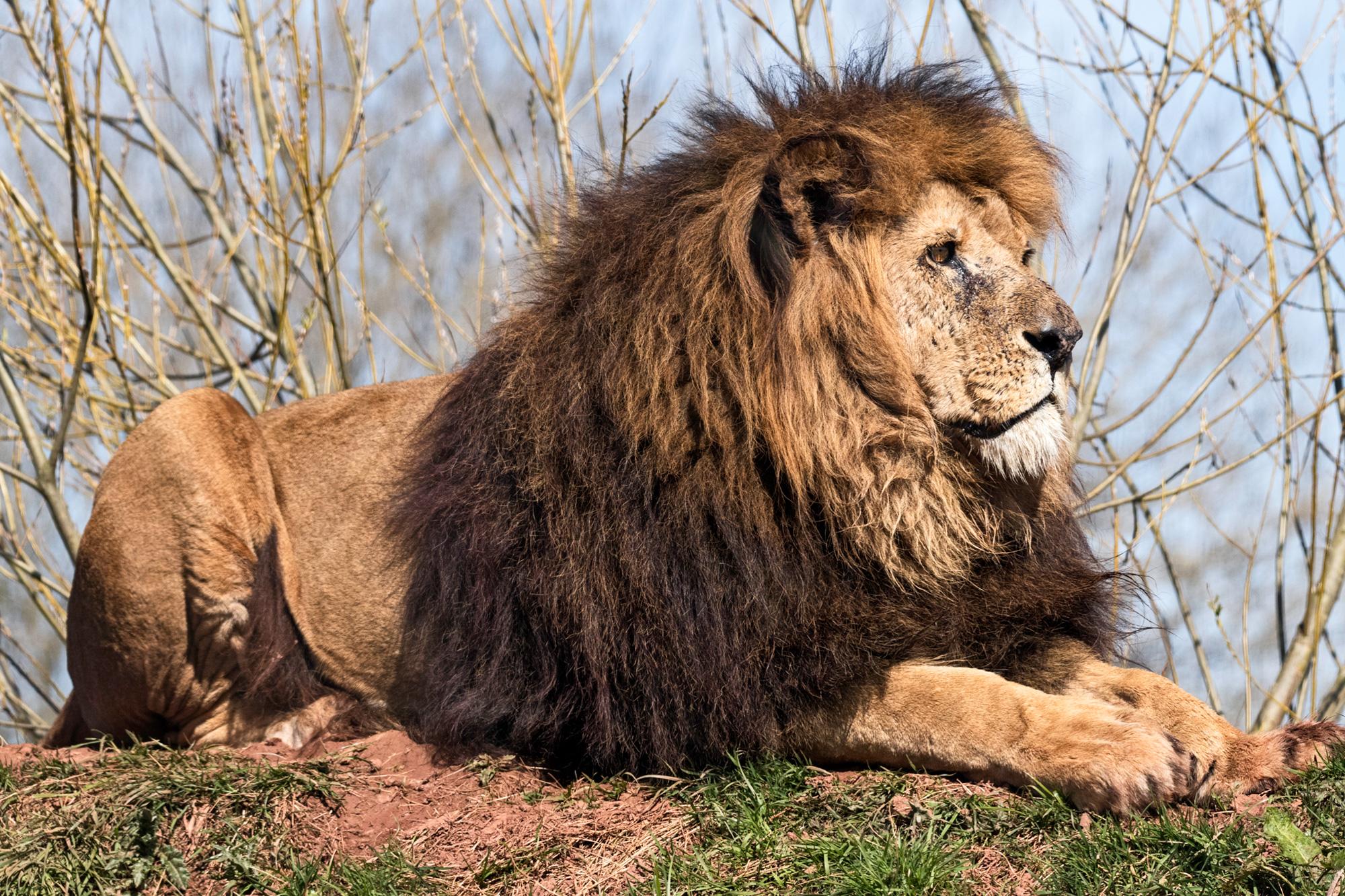 South Lakes Safari Zoo - Animal Wildlife Park & Feeding Experiences