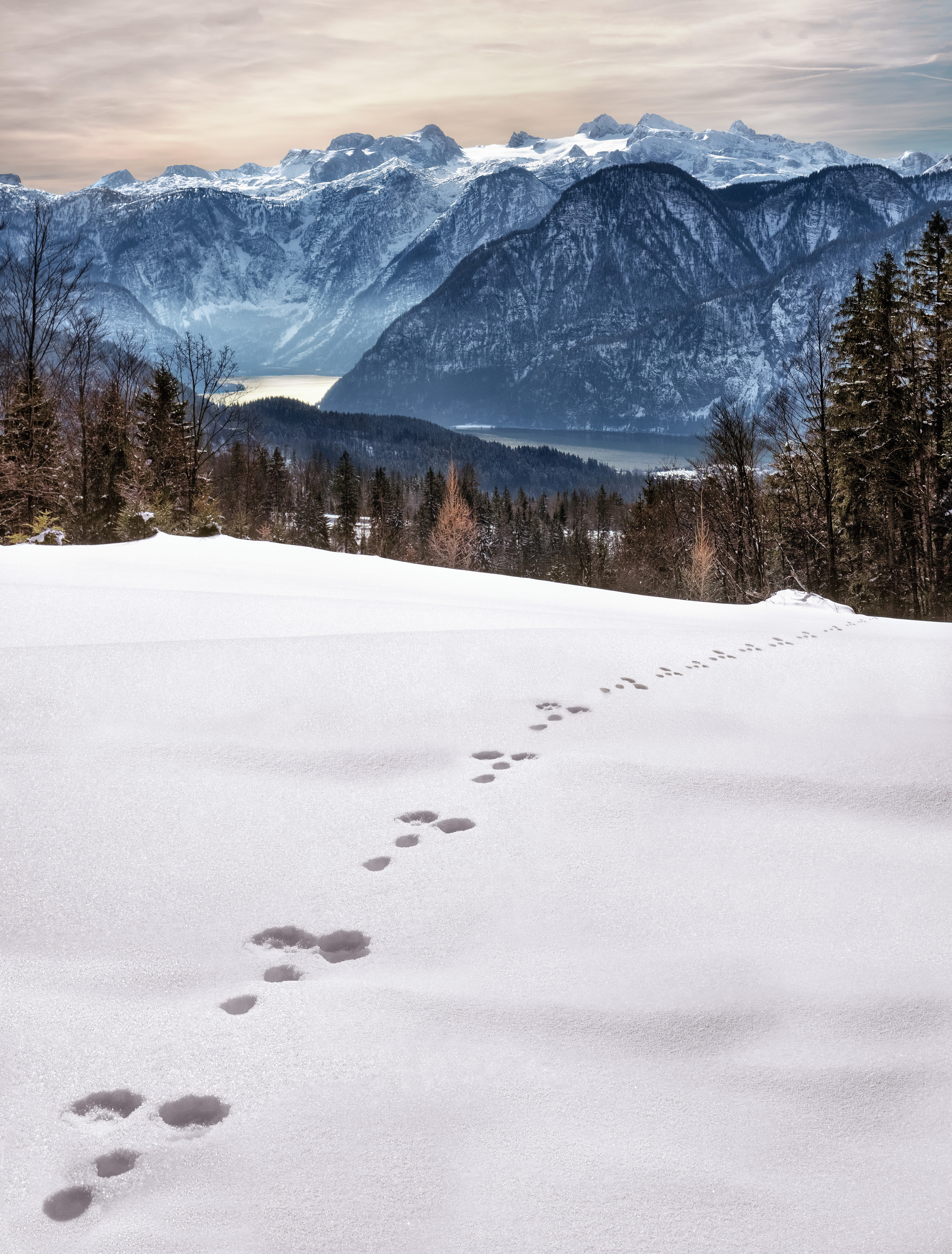 Animal Foot Prints on Snow Near Mountain at Daytime, Outdoors, Wood, Winter landscape, Winter, HQ Photo