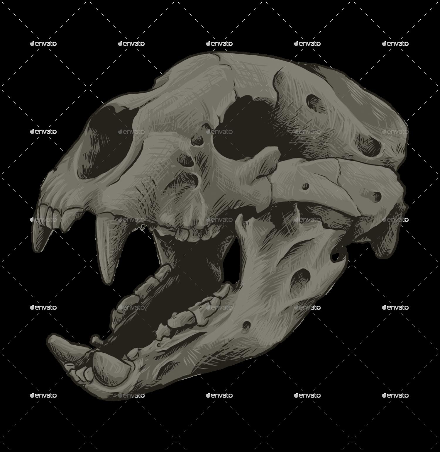 Animal Skull Vol 1 by Azurapus | GraphicRiver