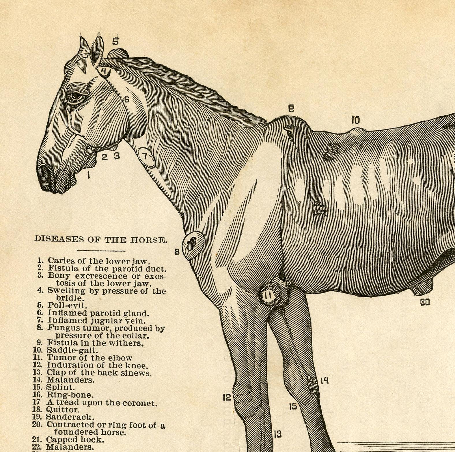 Antique anatomy illustration photo