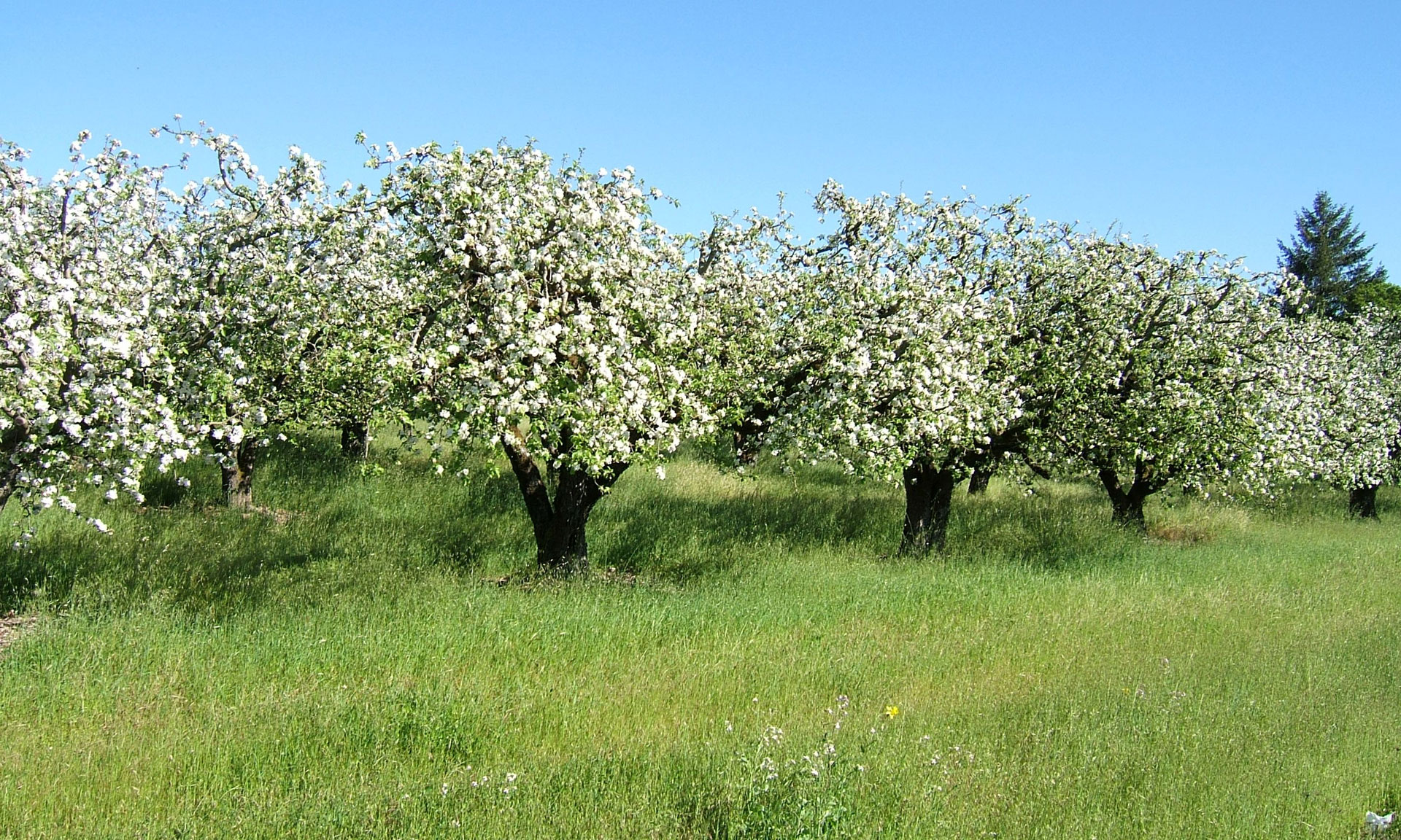 Apple Trees Are Beautiful in Every Season | North Coast Organic
