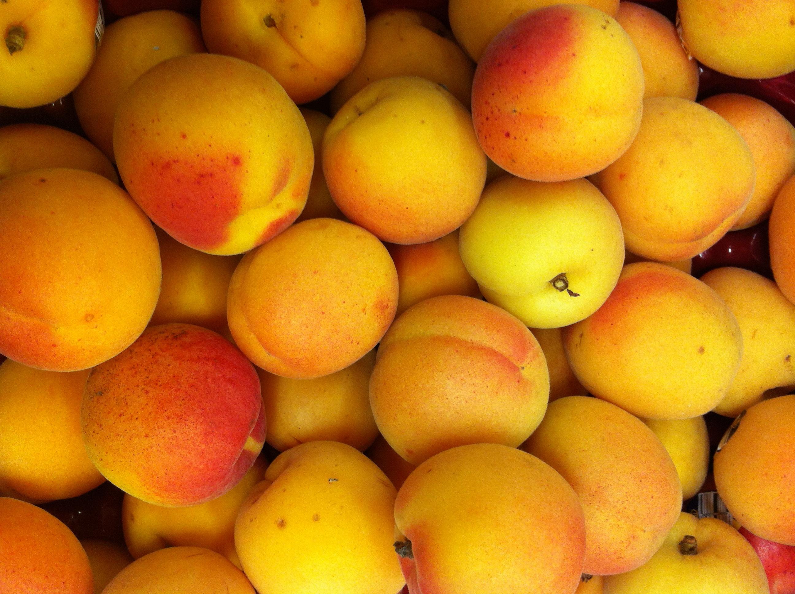 Fresh Apricots: A Forgotten Fruit - Weavers Orchard