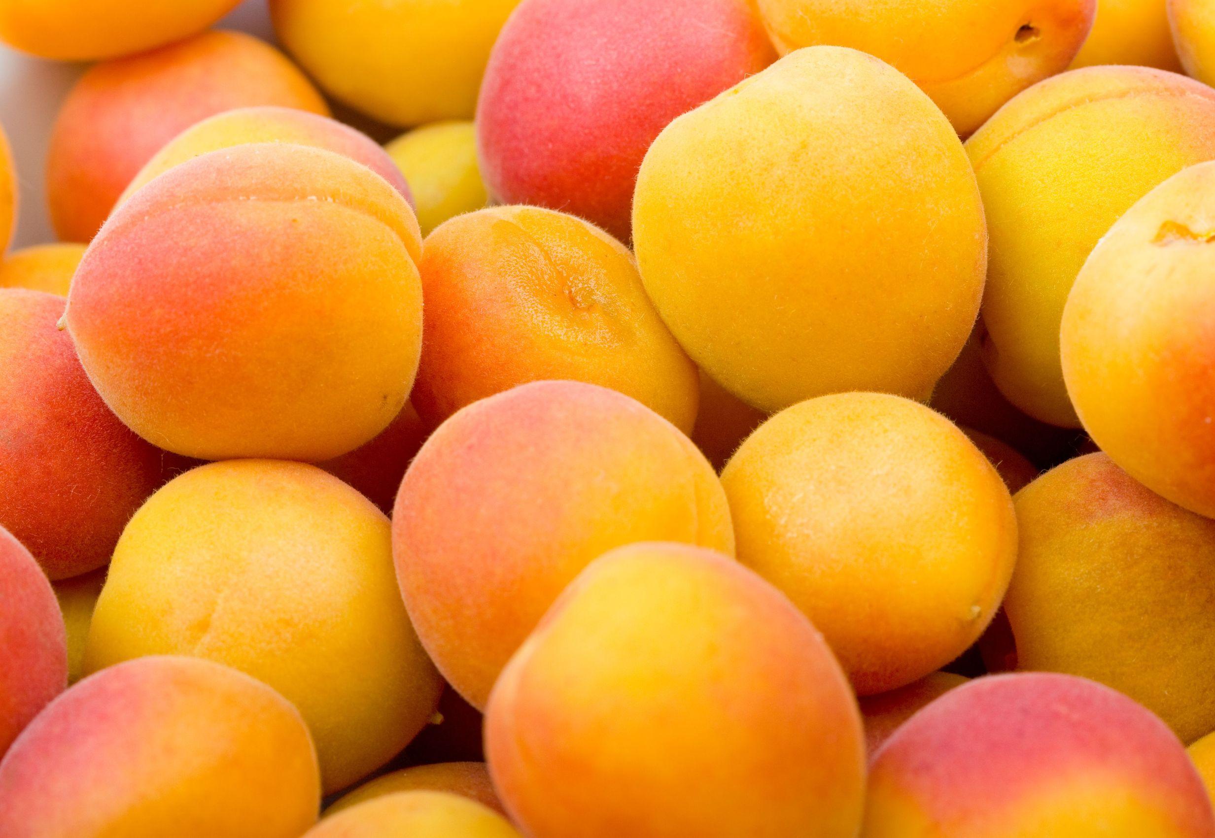 apricot | Foodimentary - National Food Holidays