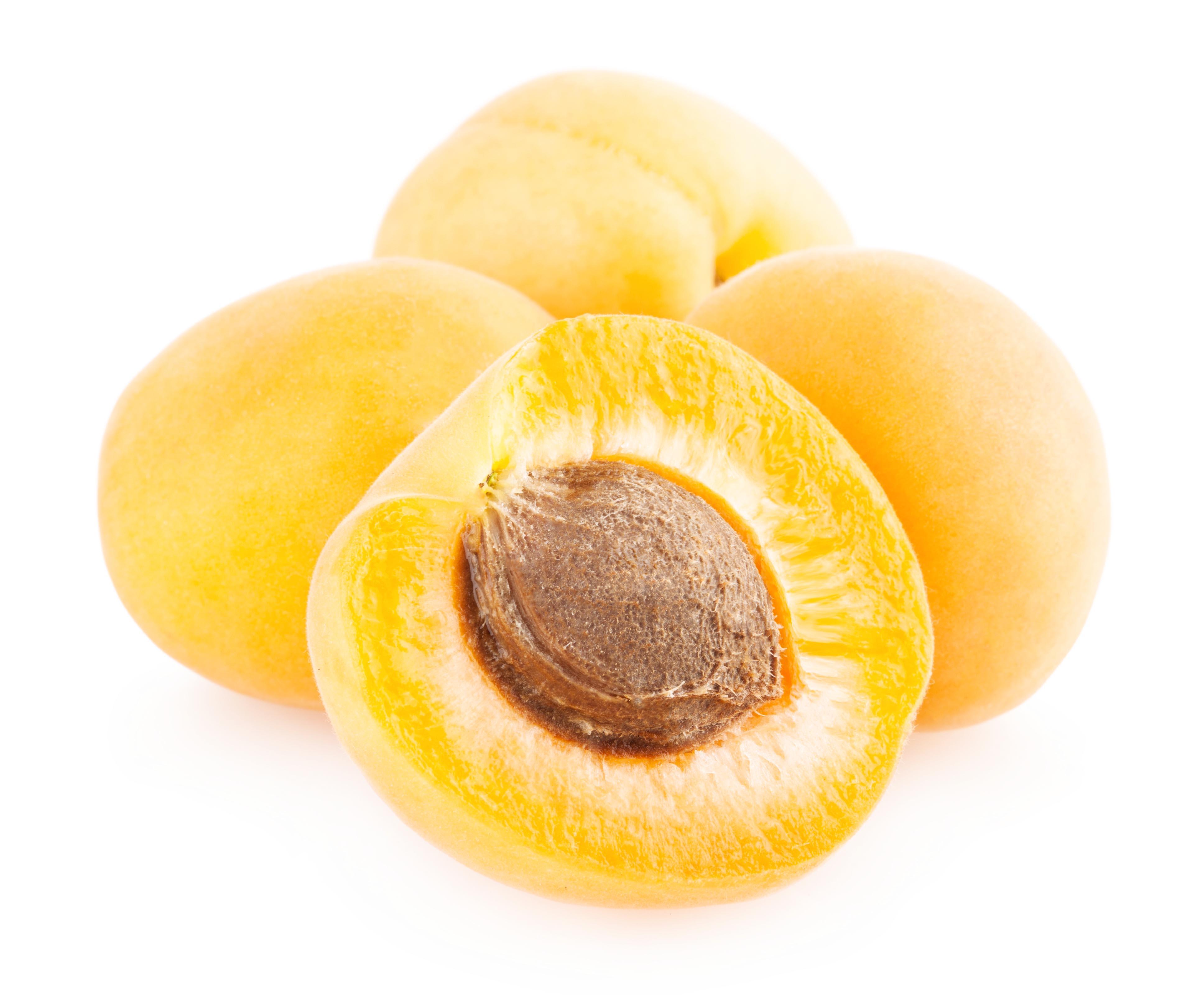 Apricot, Spring, Orange, Plant, Product, HQ Photo