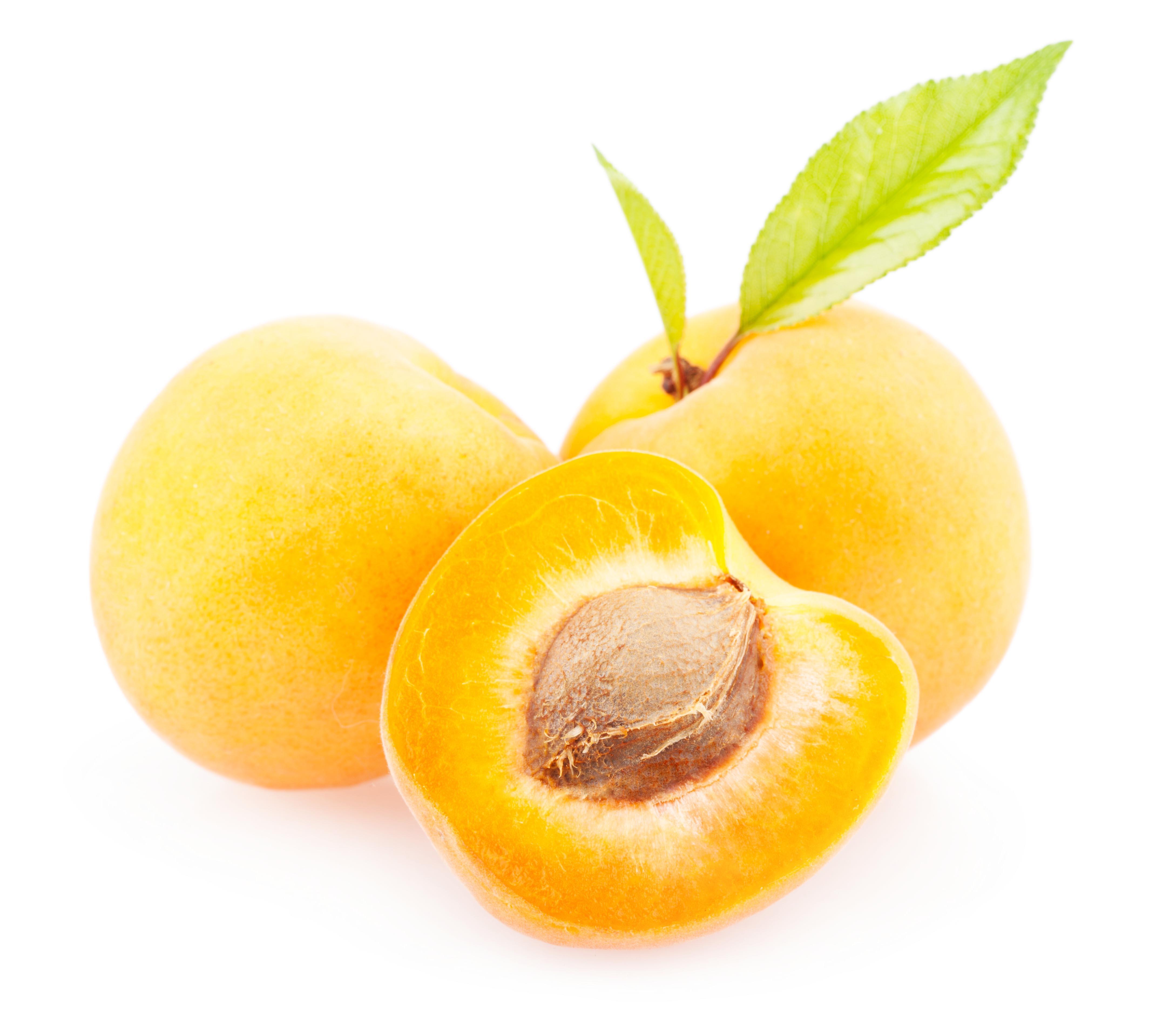 Apricots, Apricot, Spring, Orange, Plant, HQ Photo