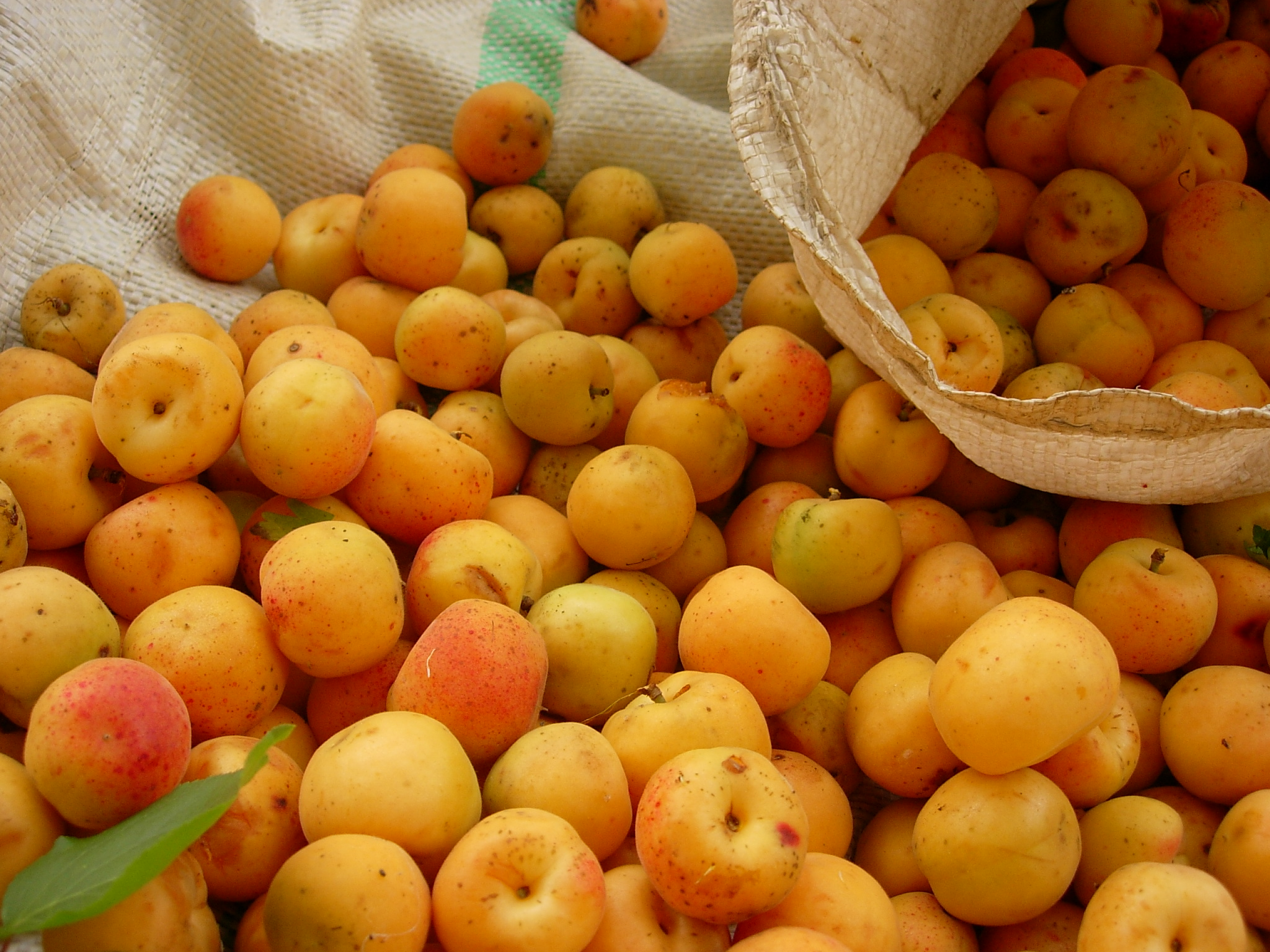 Apricot Nutrition & Health Benefits - Natural Cancer Prevention