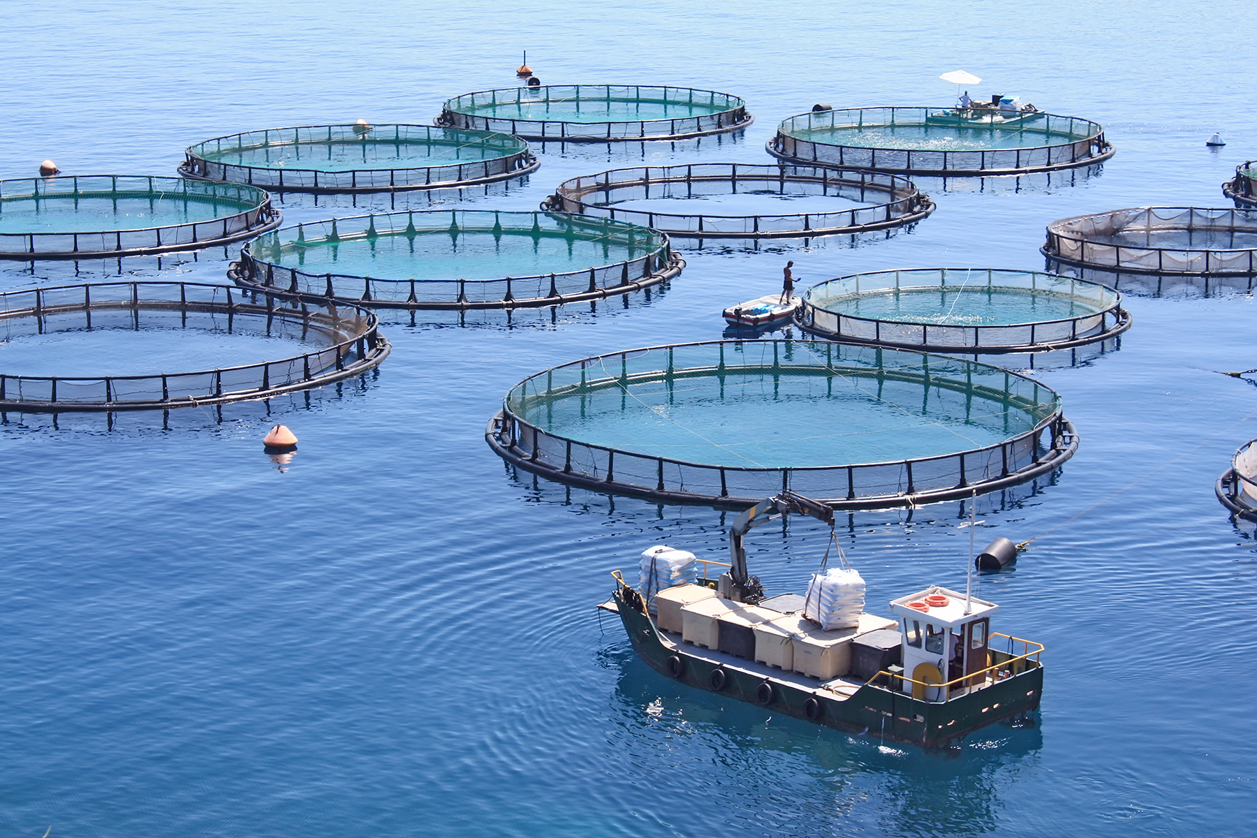 Aquaculture photo