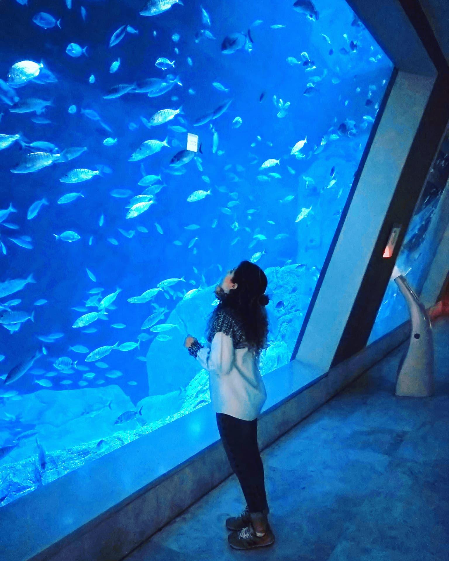Istanbul Aquarium ! – That's khawla