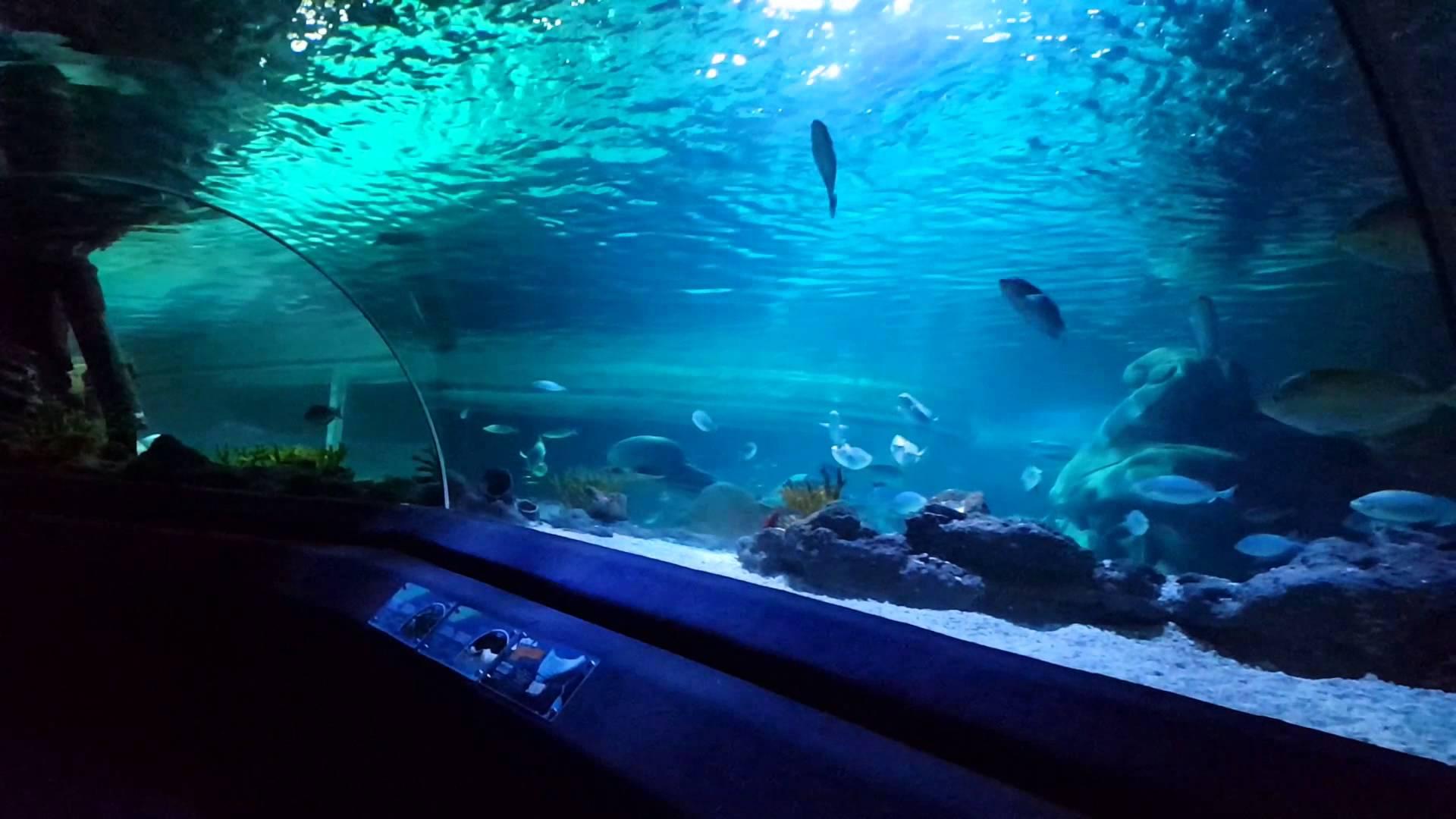 Istanbul Sealife akvaryum - YouTube
