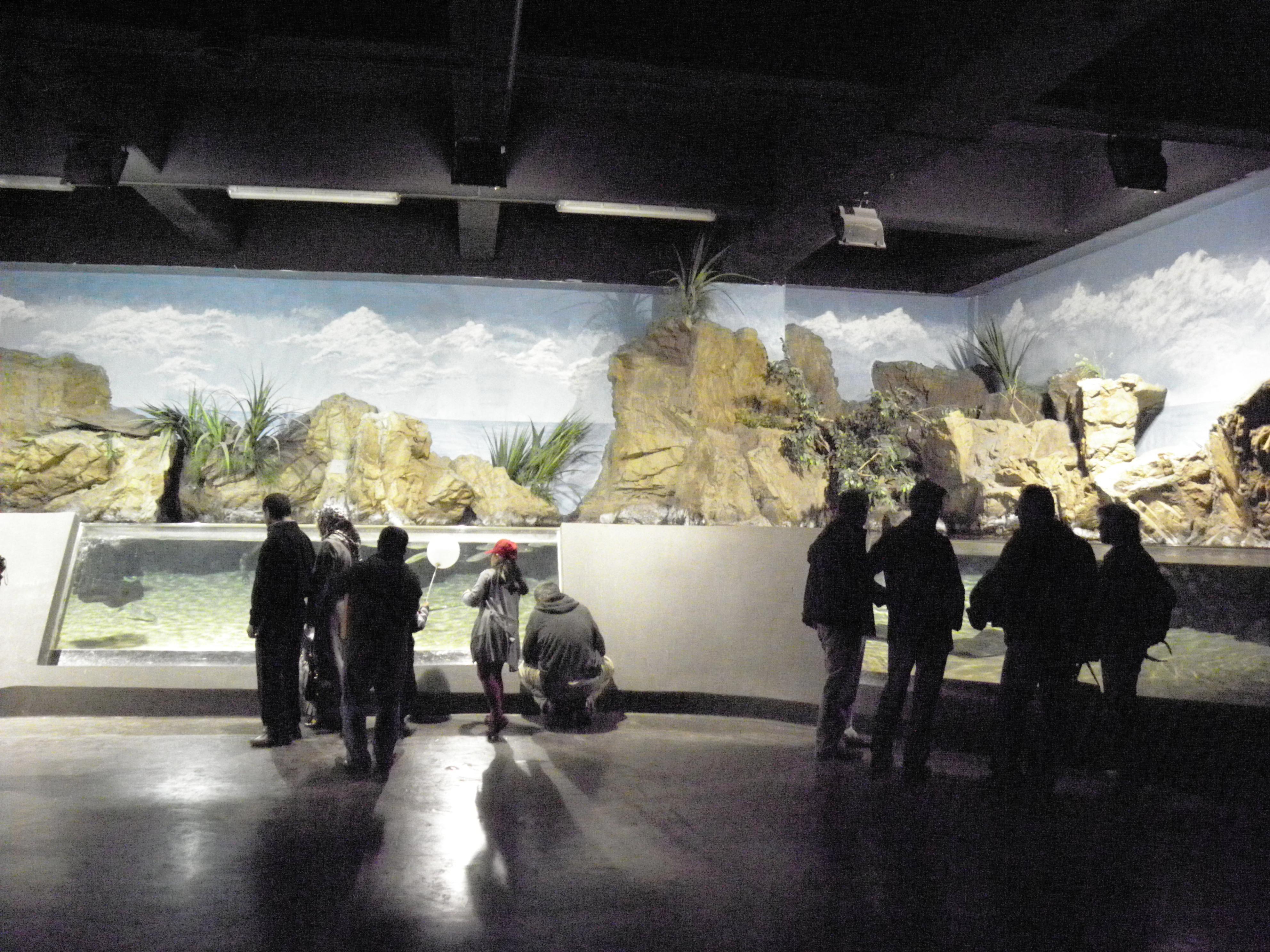 Aquarium in Istanbul., Aquarium, Indoors, Interior, Istanbul, HQ Photo