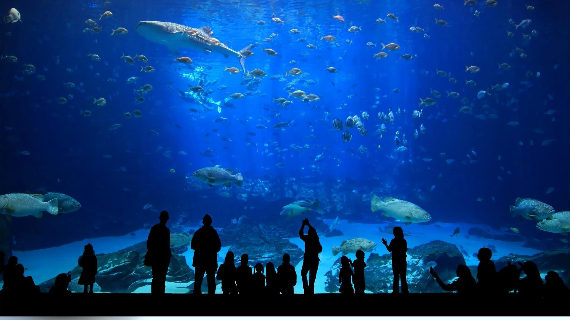 Istanbul Aquarium - Kaftan Hotel