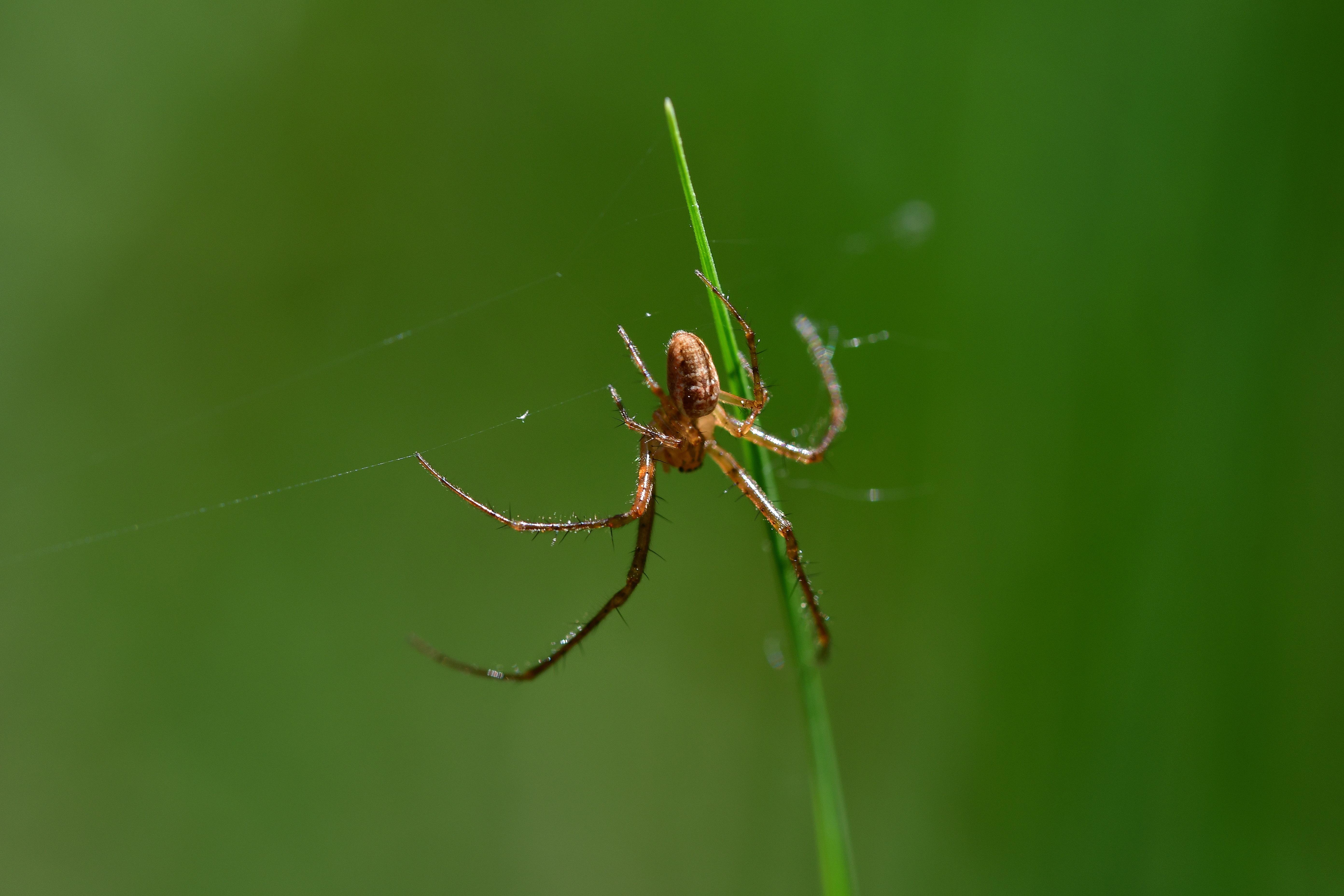 Araignées, insectes et fleurs de la forêt de Moulière (La Croix Parc), Ansozour, CC0, Domaine public, Forêt, HQ Photo