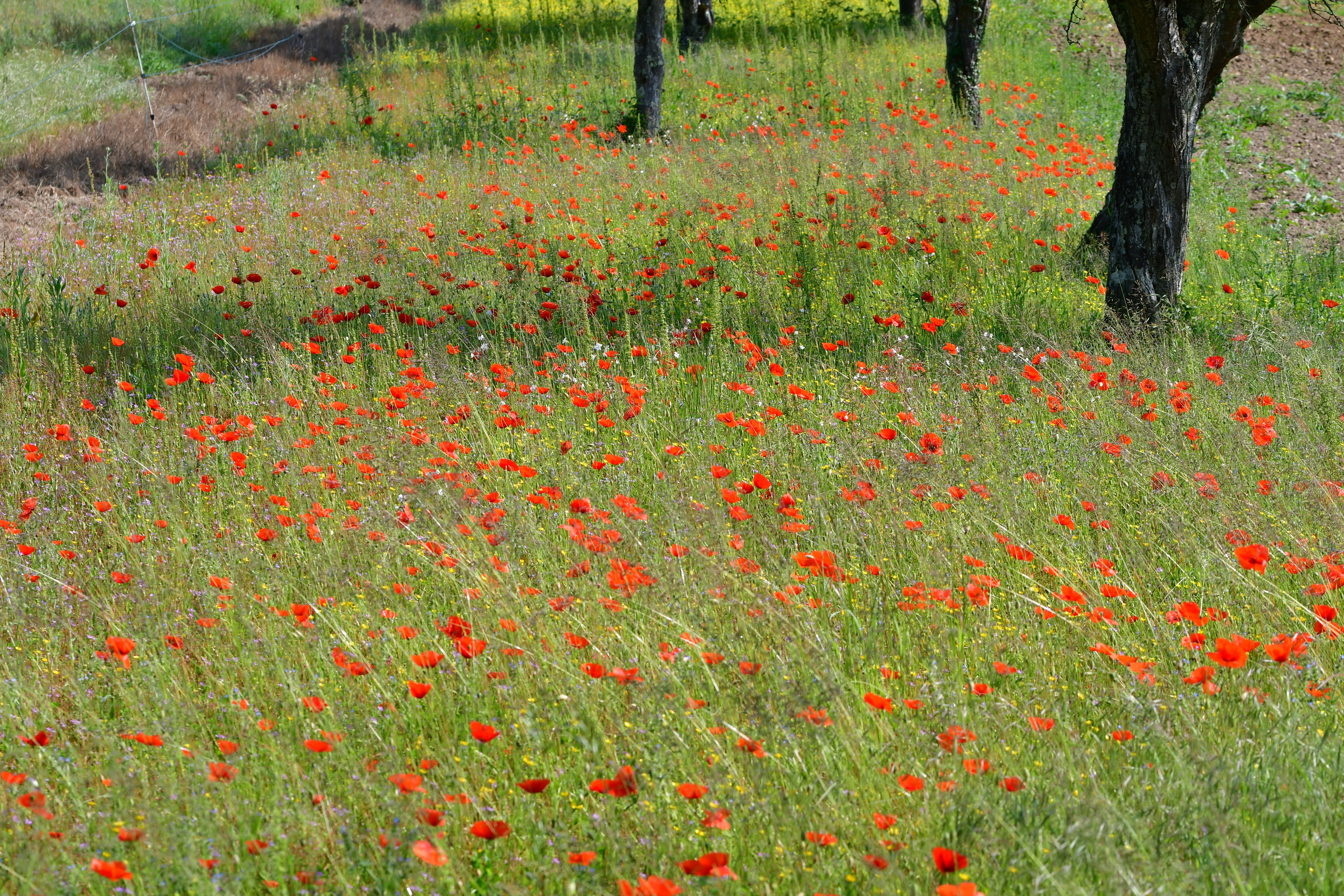 Araignées, insectes et fleurs de la forêt de moulière (le gâchet de villiers - logerie) photo