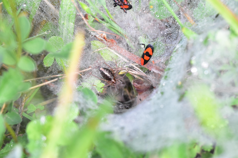 Araignées, insectes et fleurs de la forêt de moulière (le plan des aises - la fosse au loup) photo