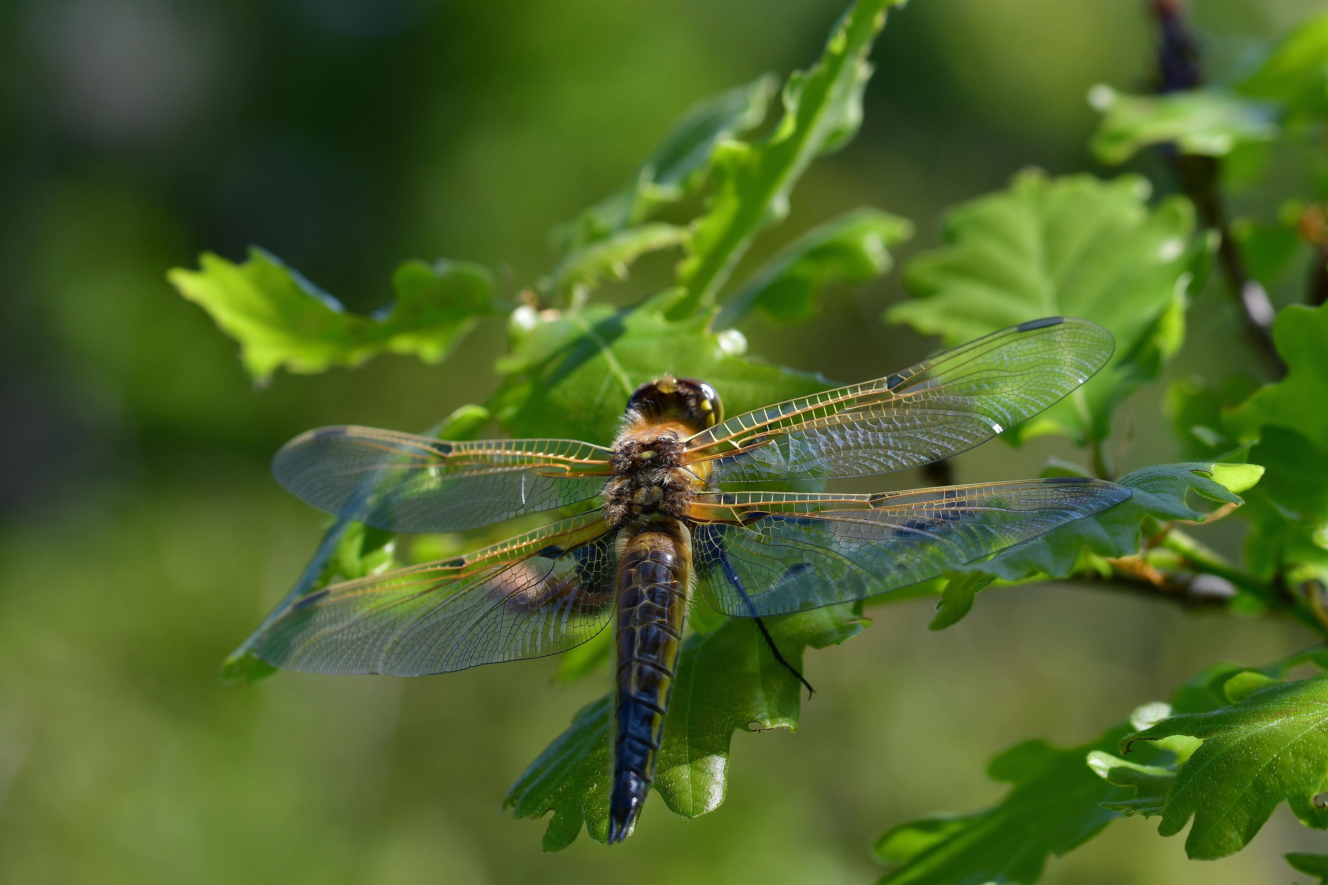 Araignées, insectes et fleurs de la forêt de moulière (les chirons noirs) photo