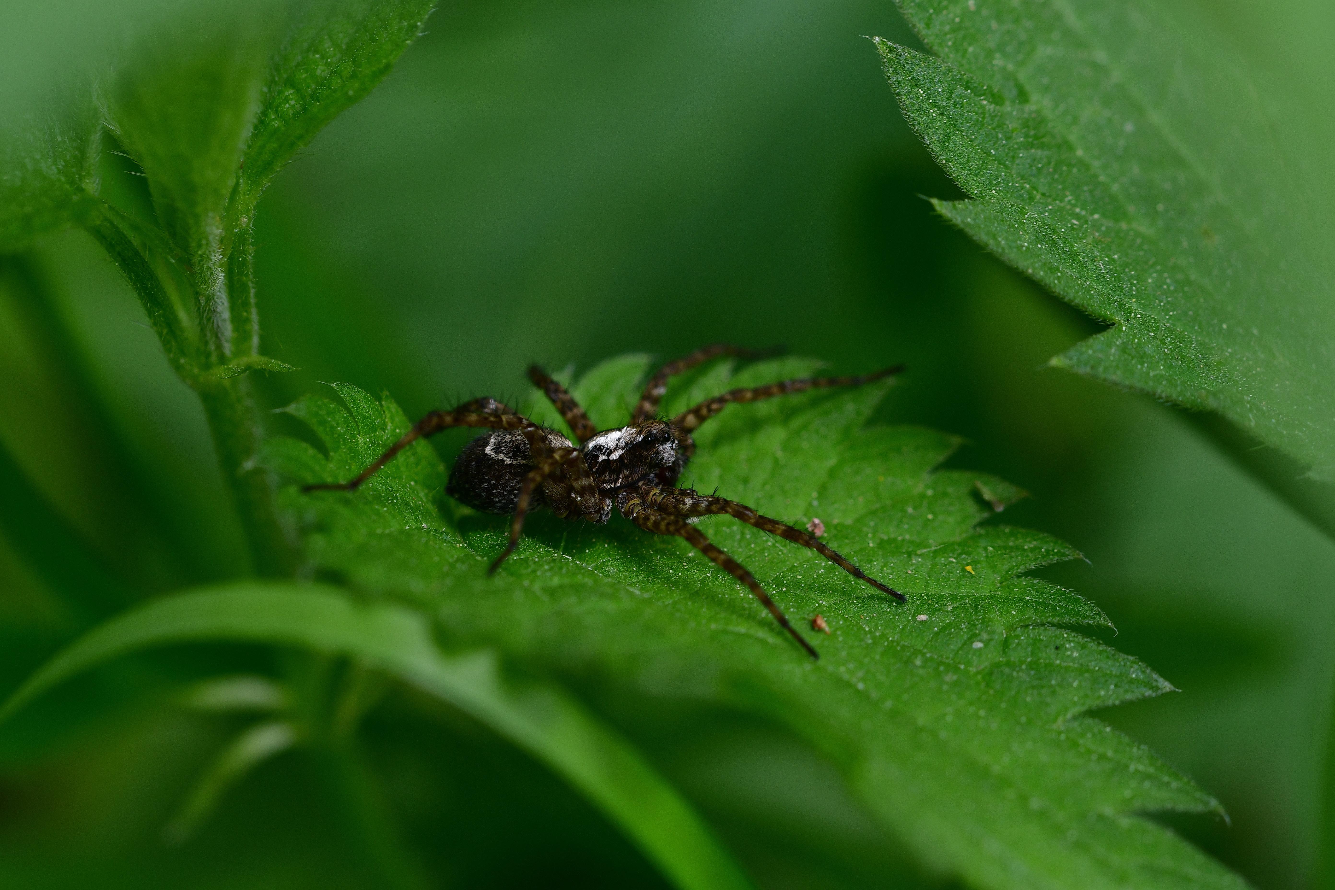 Araignées, insectes et fleurs - Les chemins éclectiques (La Varenne - La Grotte à Calvin), Ansozour, CC0, Domaine public, Free, HQ Photo