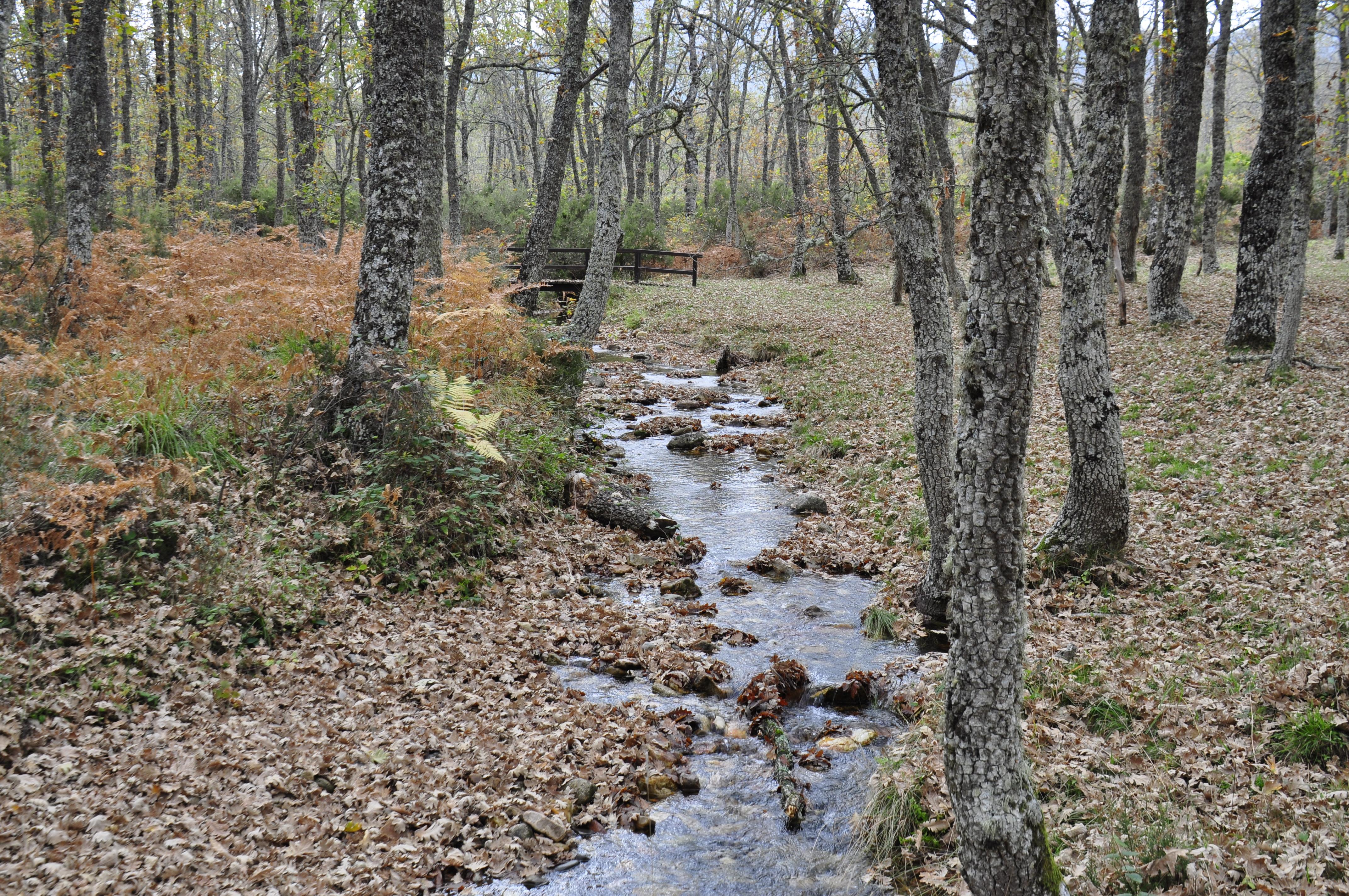Arroyo de la Barranca o Gabín, Forest, Landscape, Naturaleza, Outdoor, HQ Photo