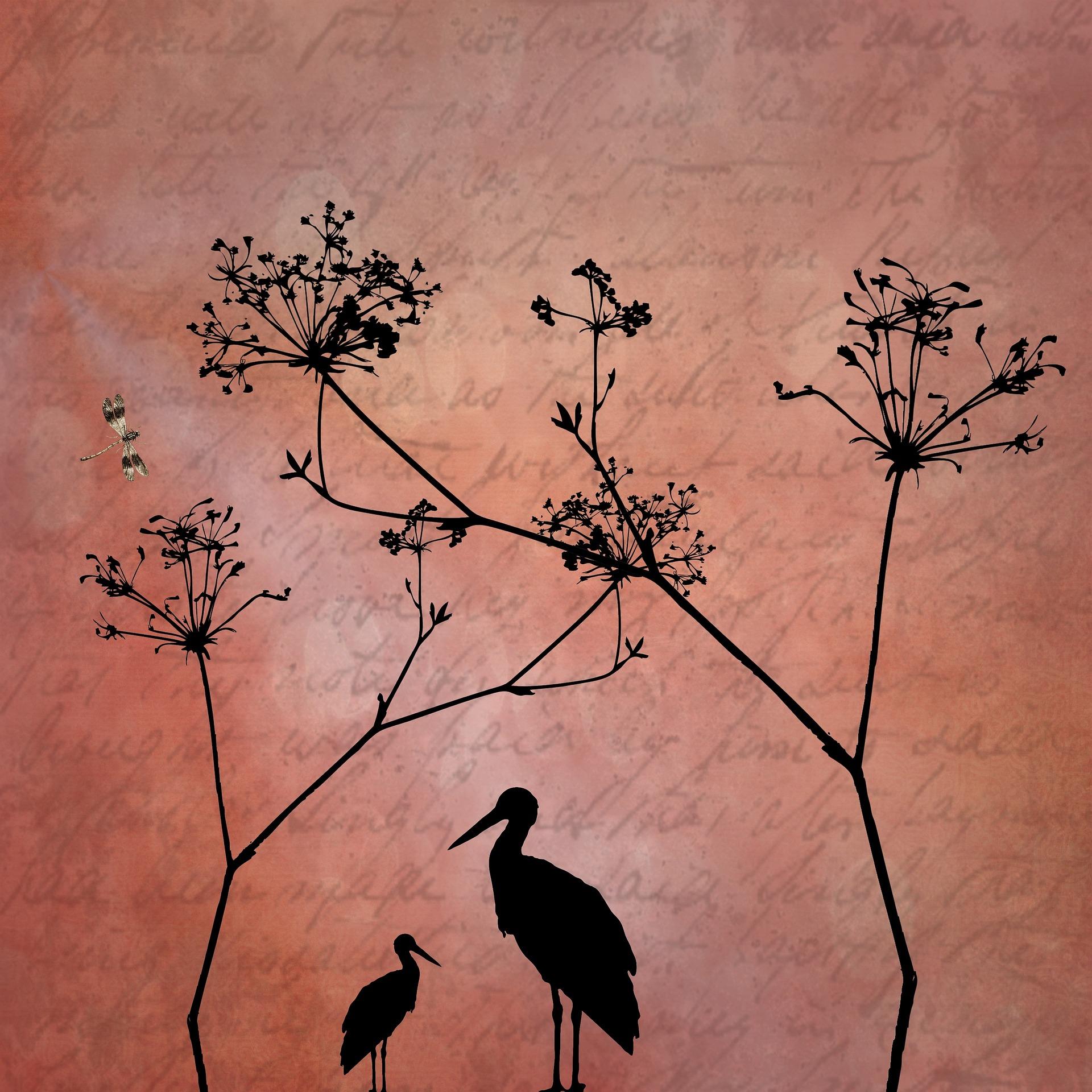 Art, Shadows, Texture, Rough, Plants, HQ Photo