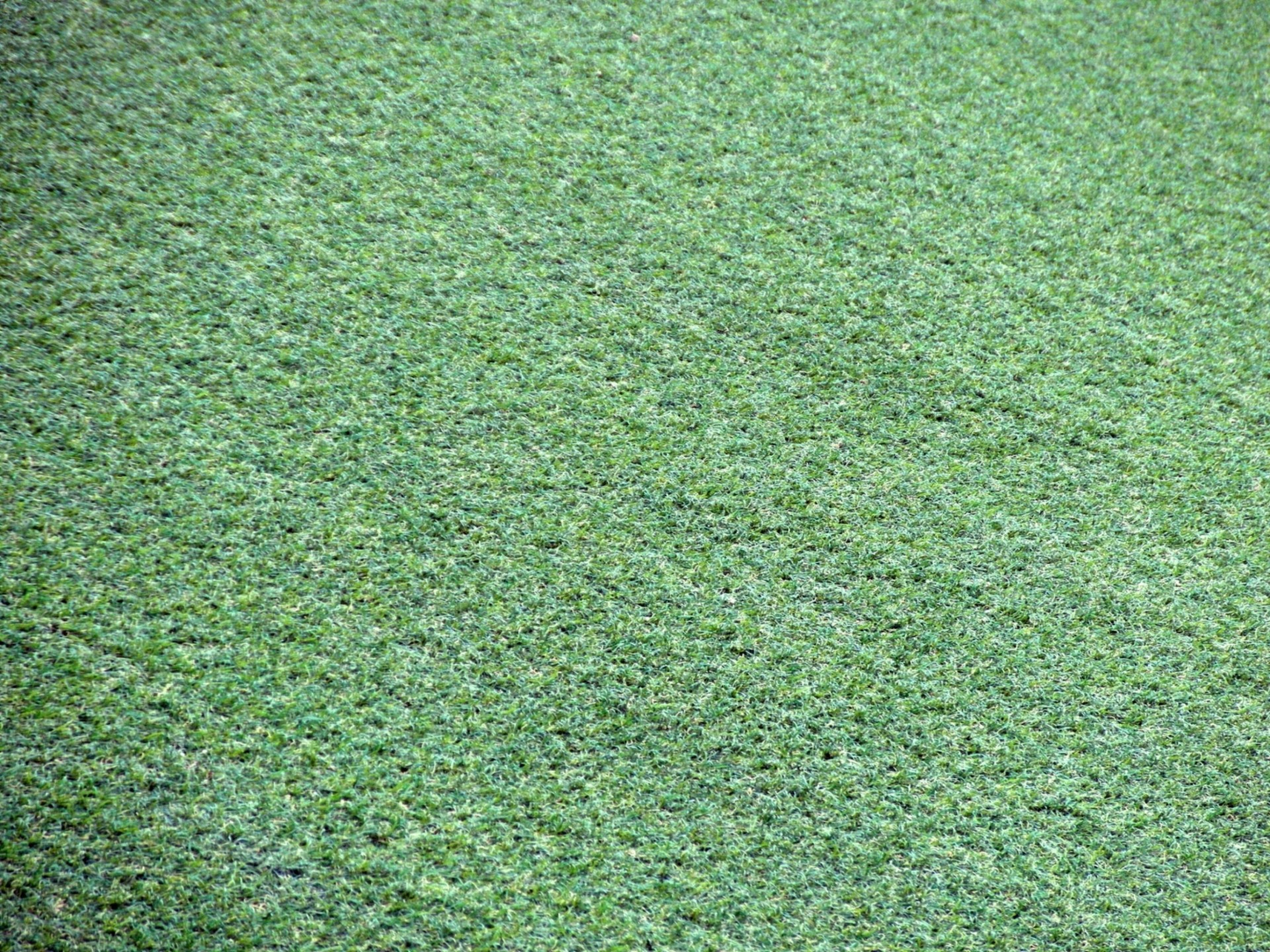 Artificial Grass Background Free Stock Photo - Public Domain Pictures