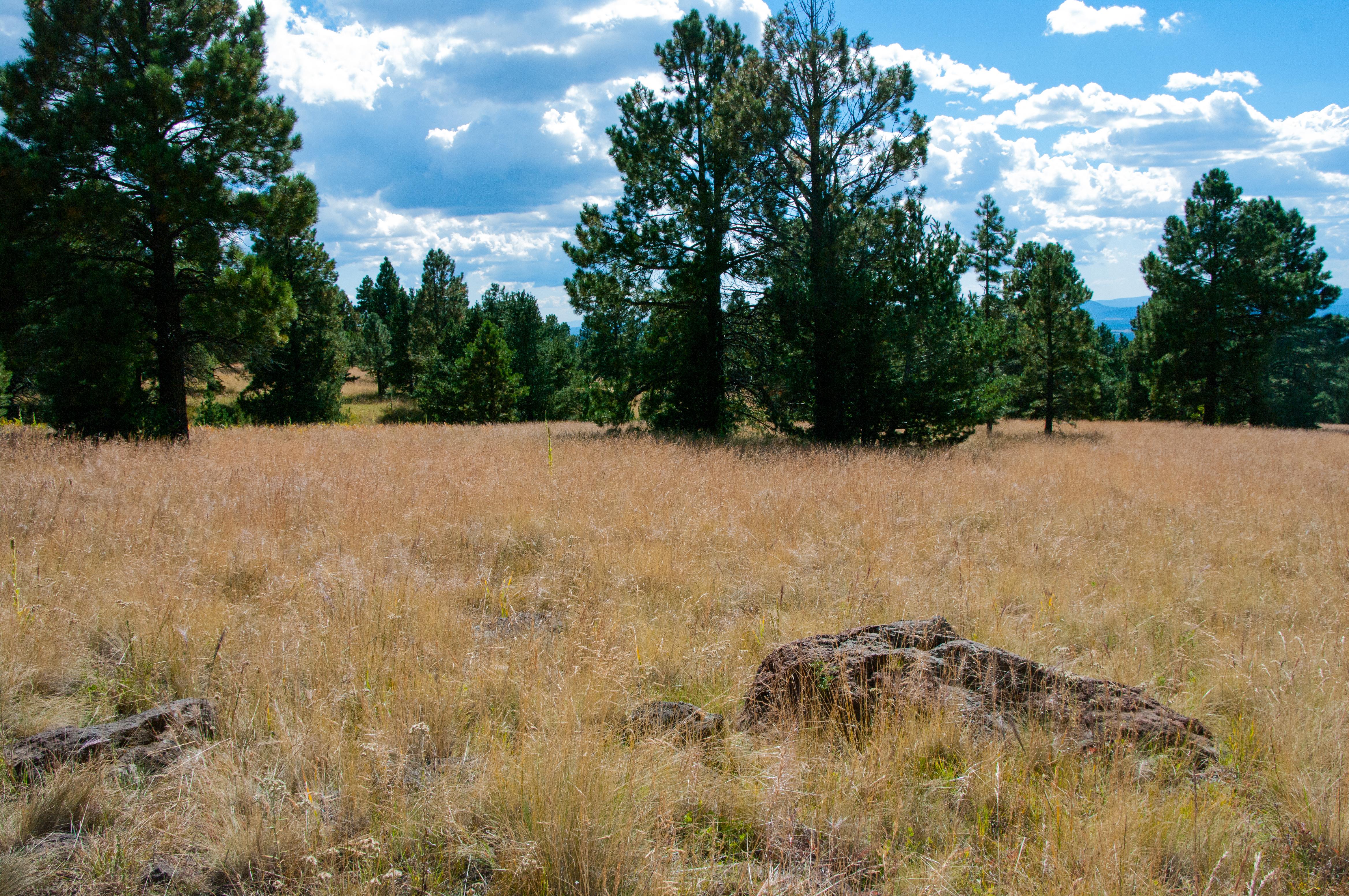 Aspen loop / arizona trail photo