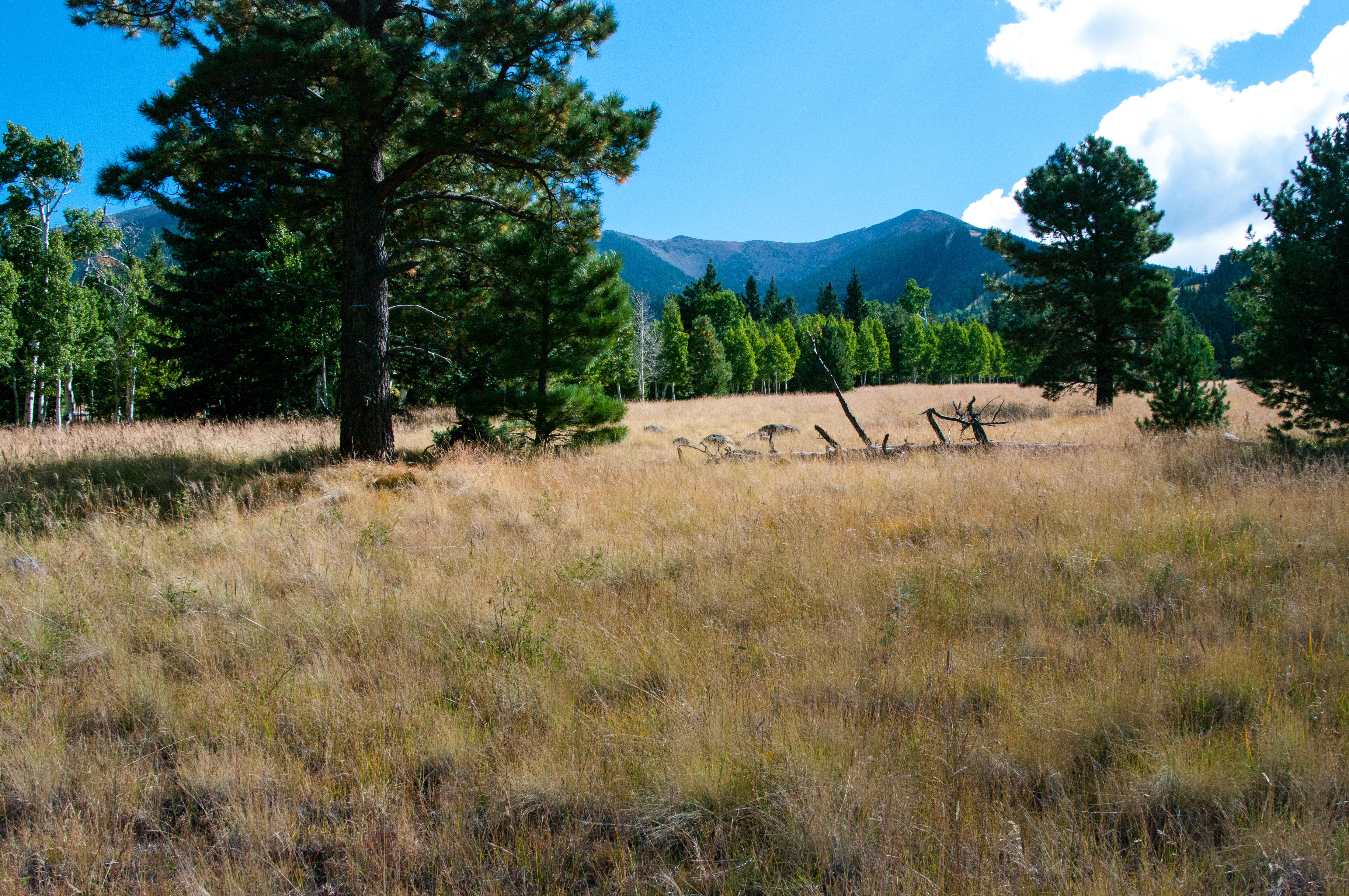 Aspen loop trail no. 73 photo