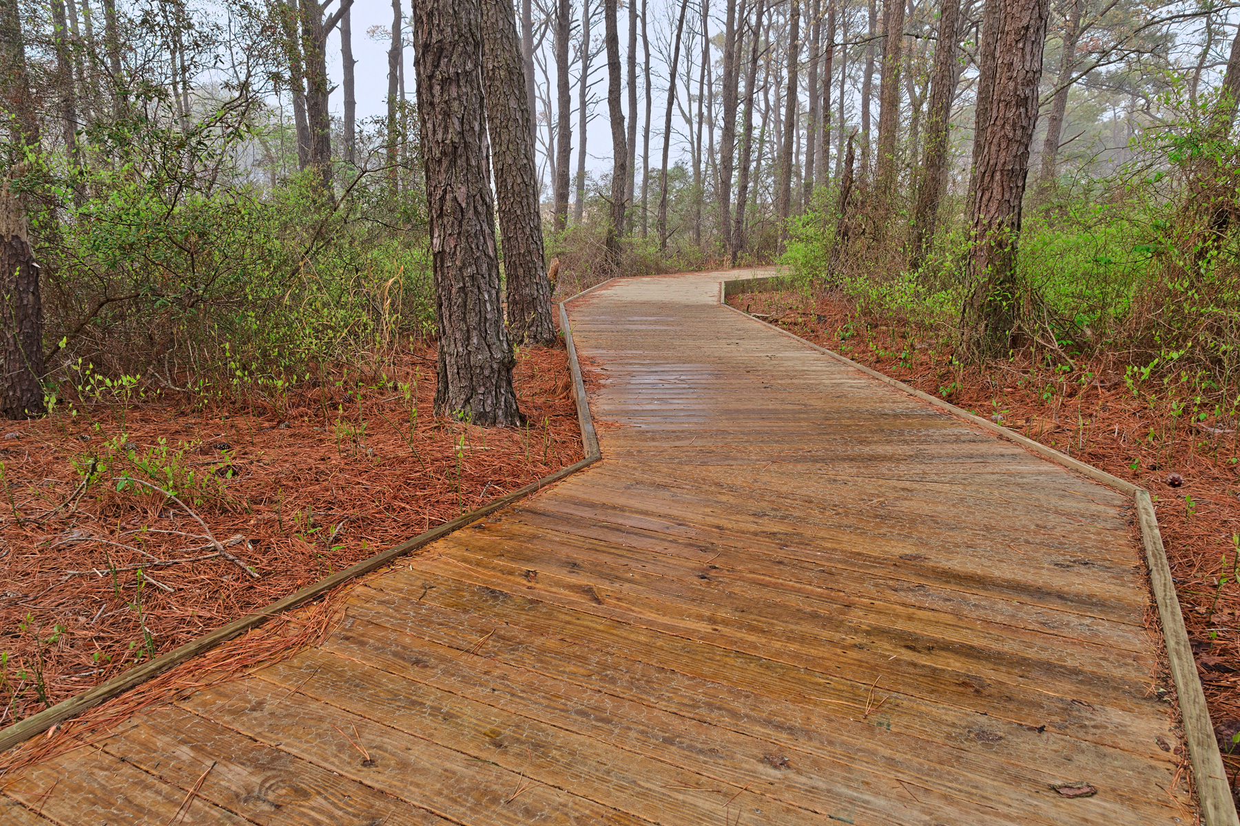 Assateague island boardwalk trail - hdr photo