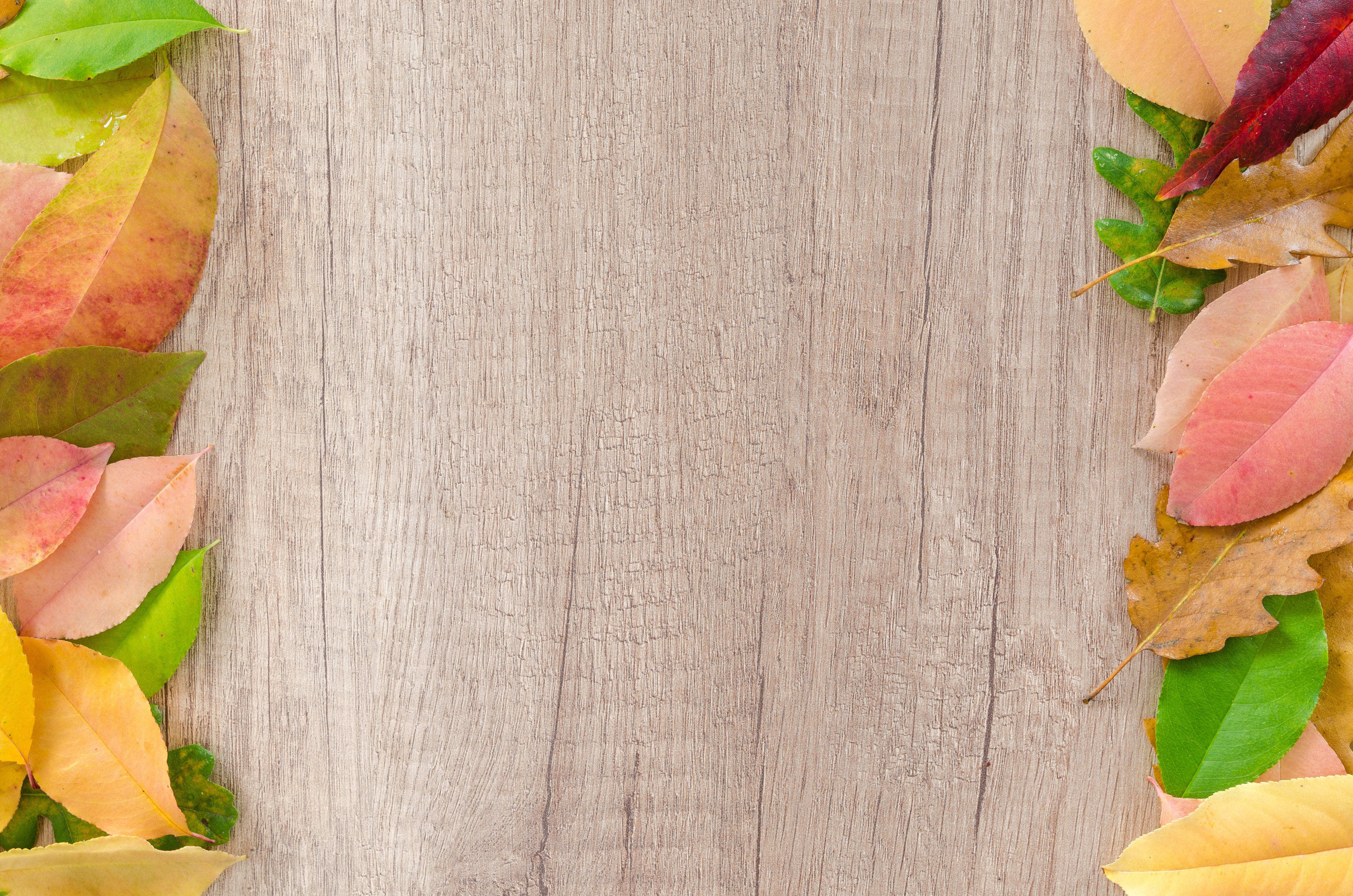 Assorted Leaves on Brown Wooden Surface, Autumn, Maple, Wood, Vivid, HQ Photo