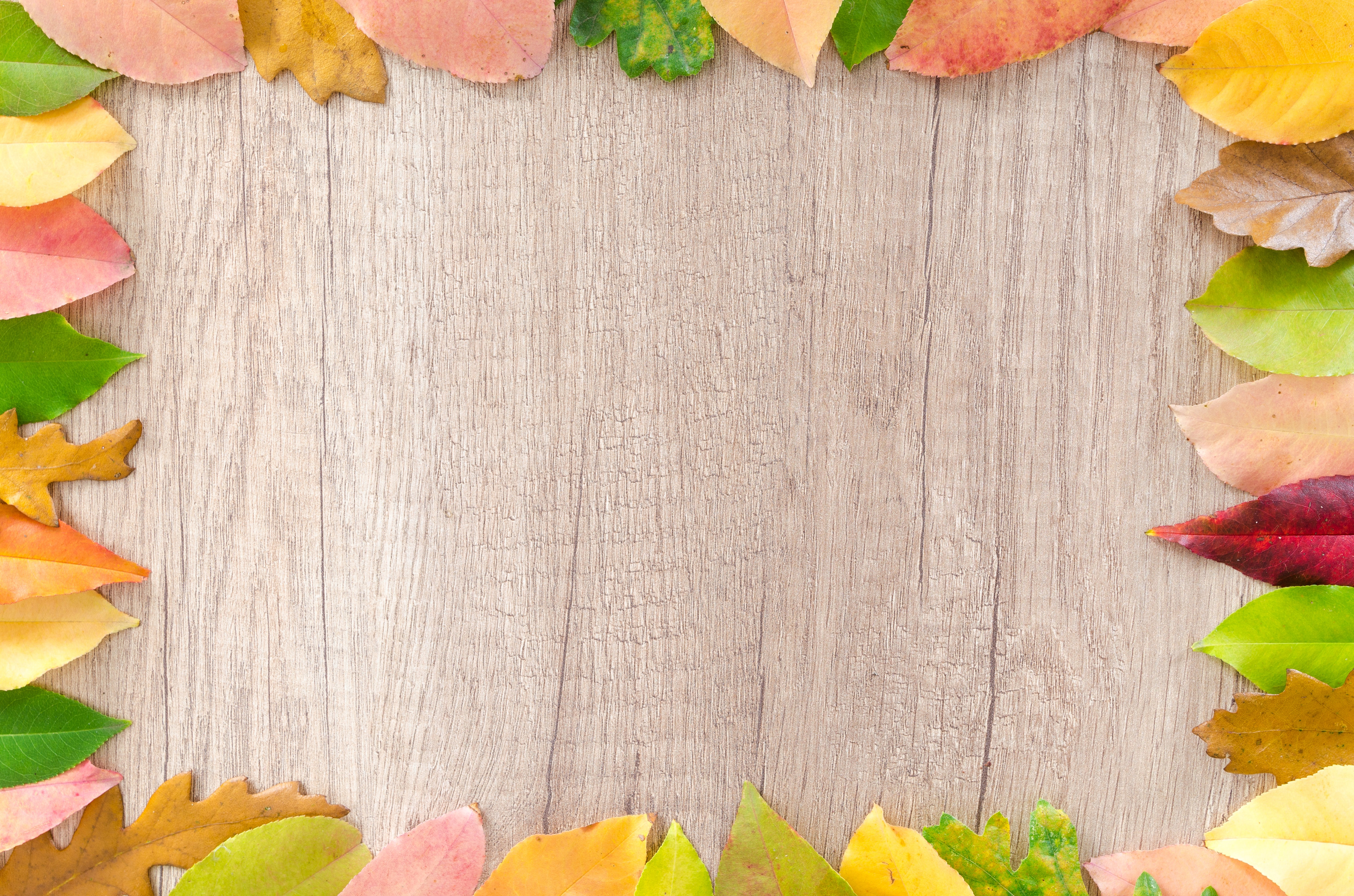 Assorted leaves piled on border of brown wooden board photo