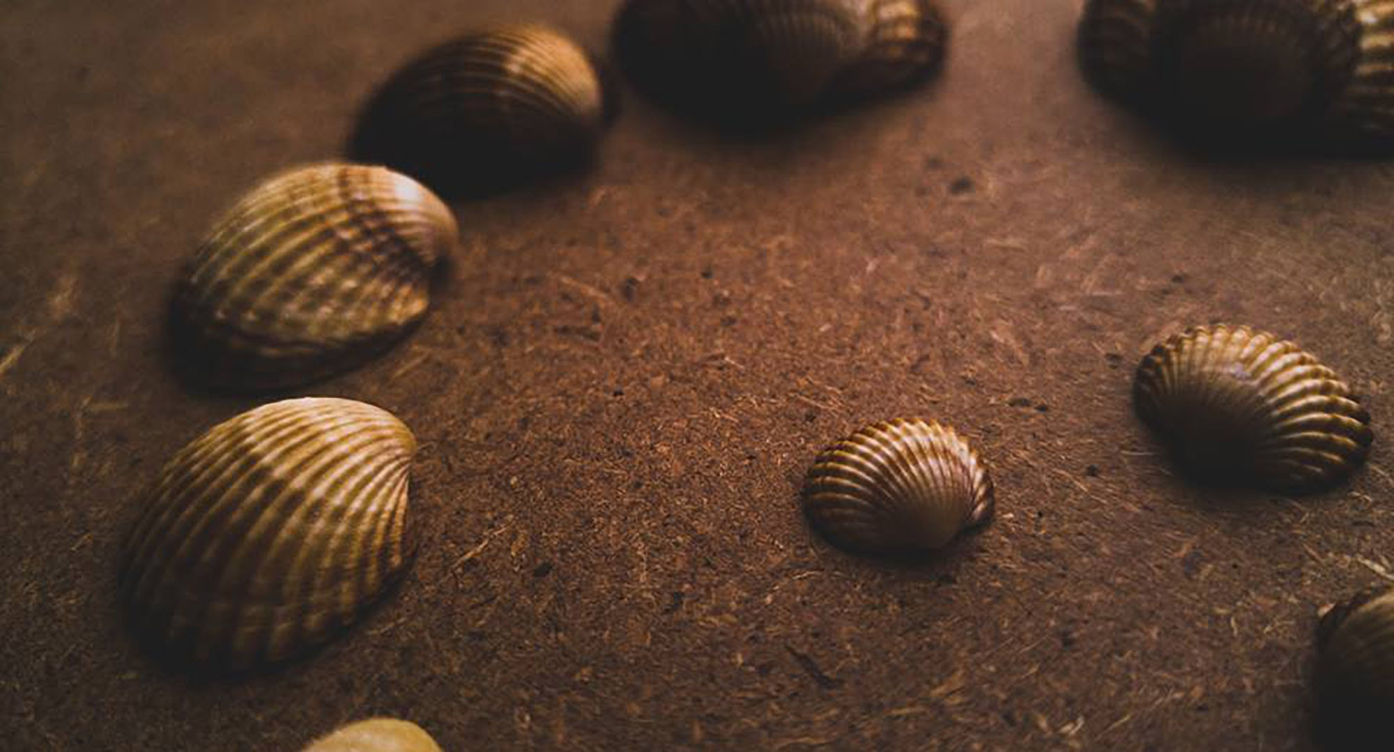 Assorted Seashell on Sand, Assorted, Tropical, Texture, Summer, HQ Photo