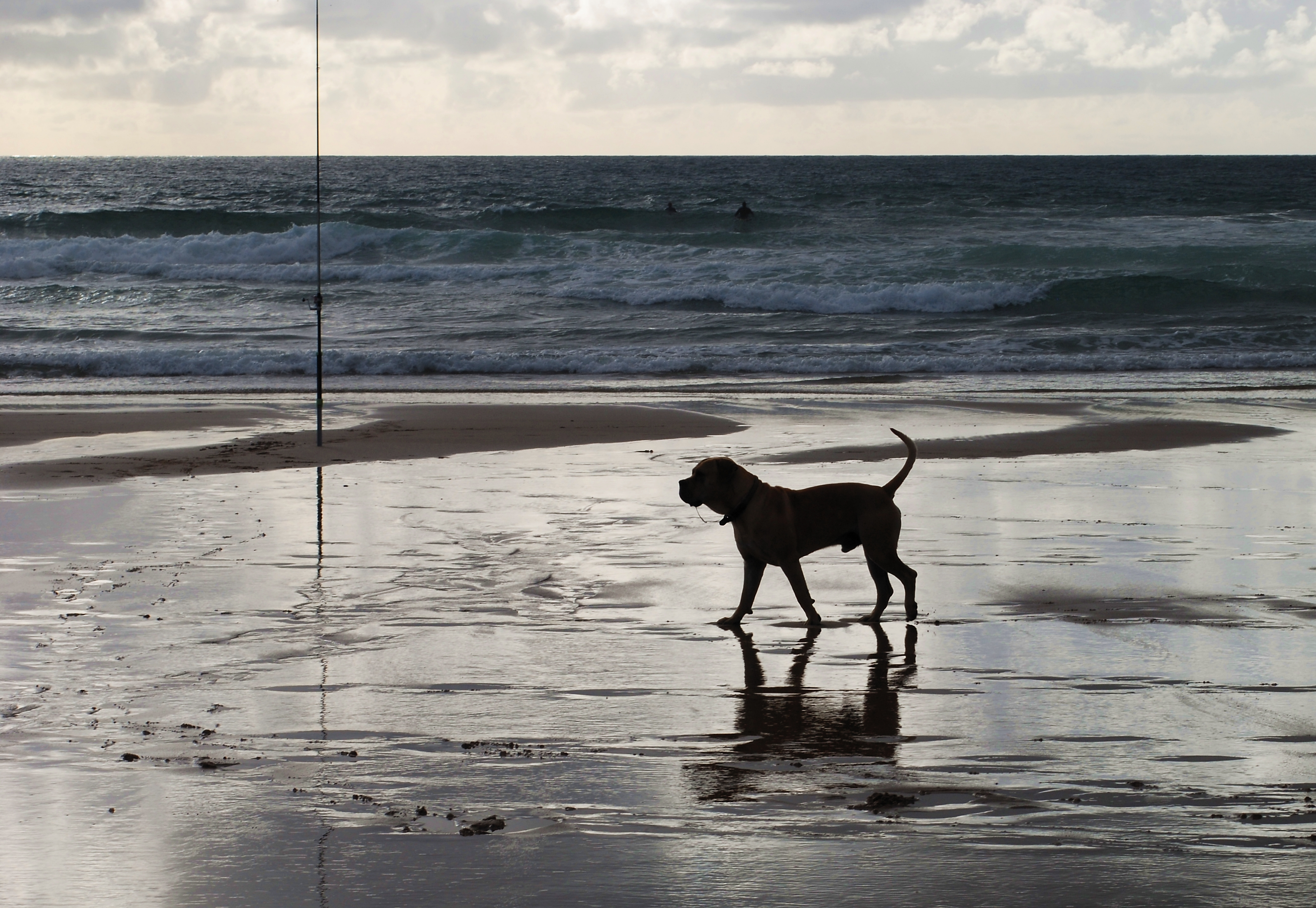 File:Dog looking at the sea.jpg - Wikimedia Commons