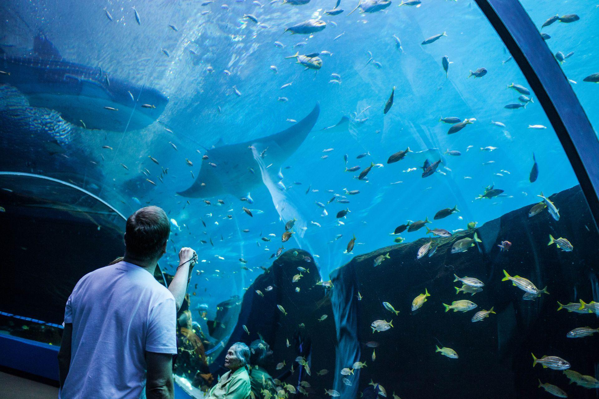 Top 5 Spring Break Experiences at Georgia Aquarium   Georgia Aquarium