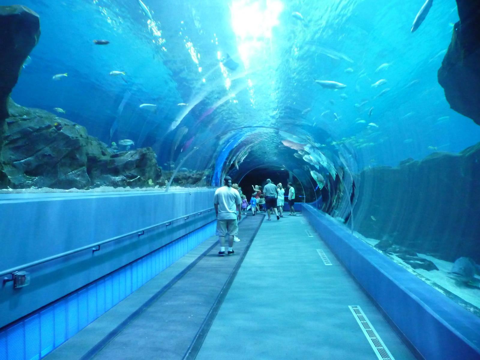 Georgia Aquarium, Atlanta, Georgia, Visit USA. Epic USA Adventure ...