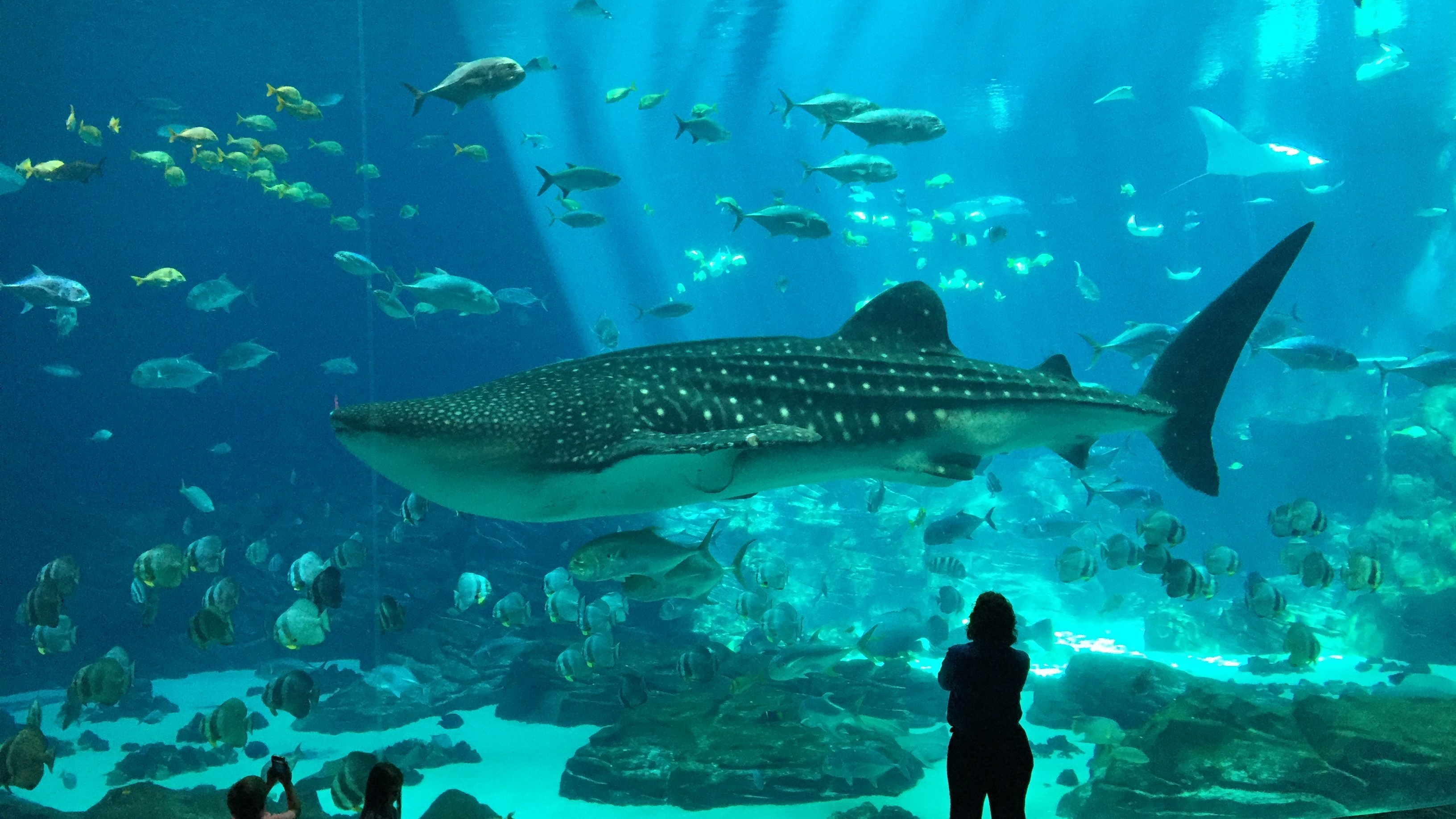 Atlanta's Must See Attractions - Wanderlust on a Budget