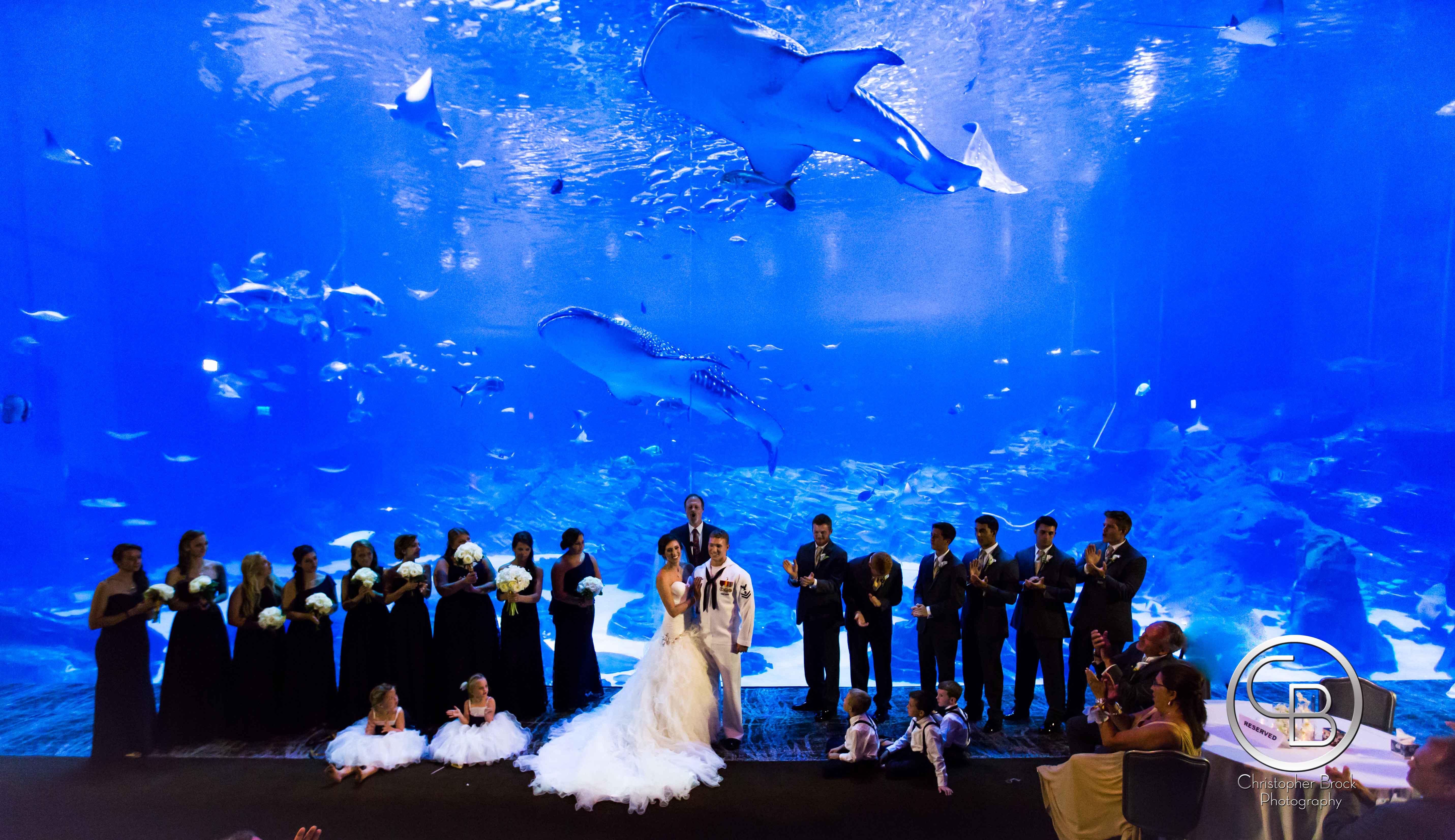 georgia aquarium wedding 2 - Christopher Brock Photography - Atlanta, GA