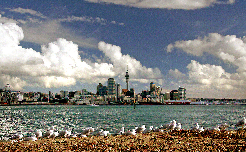 Auckland Skyline. NZ, Alpha, Landscape, Urban, Sky, HQ Photo