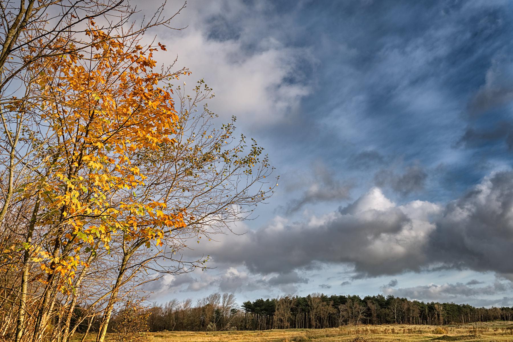 Autum sky photo
