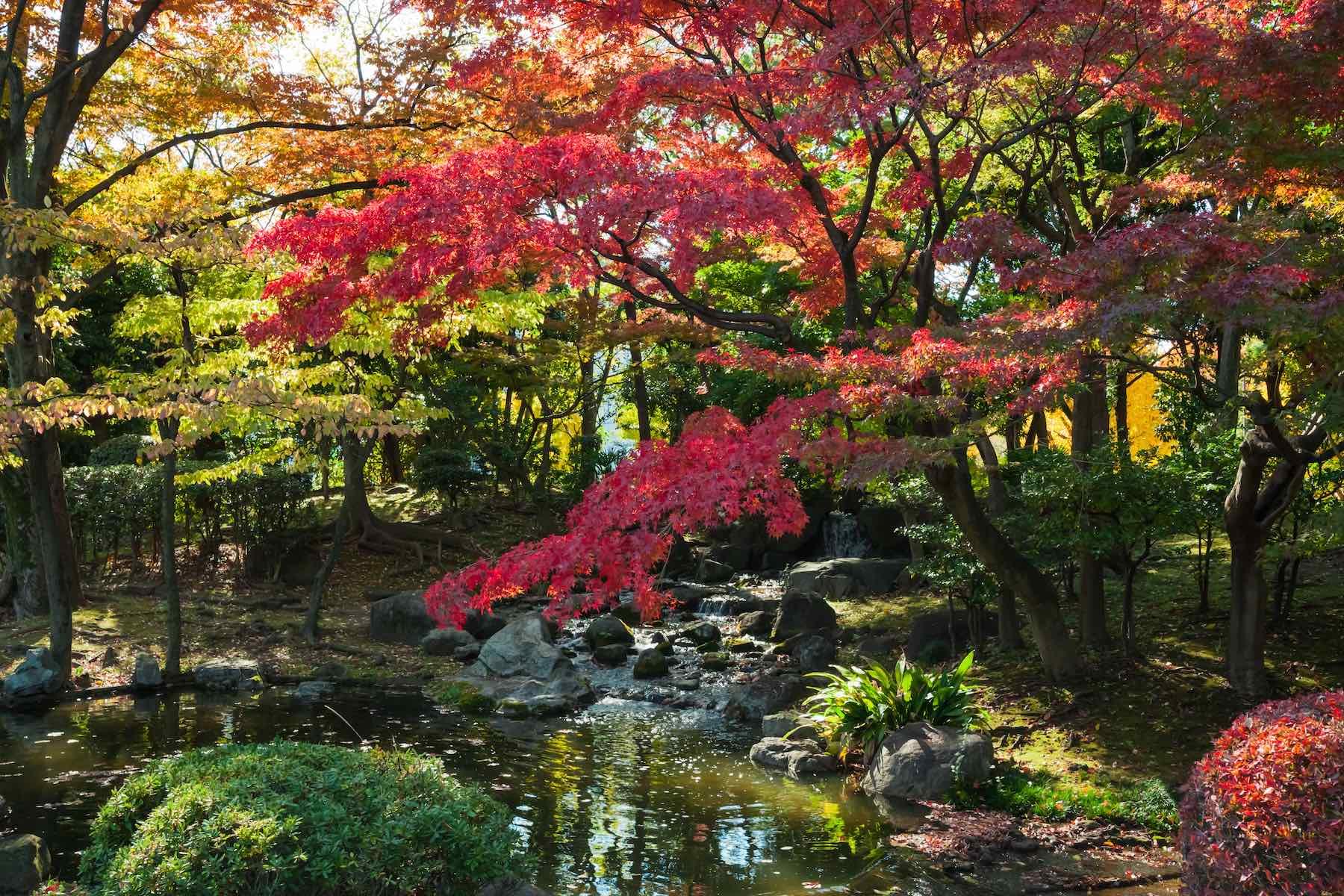 Genial Autumn Asian Garden