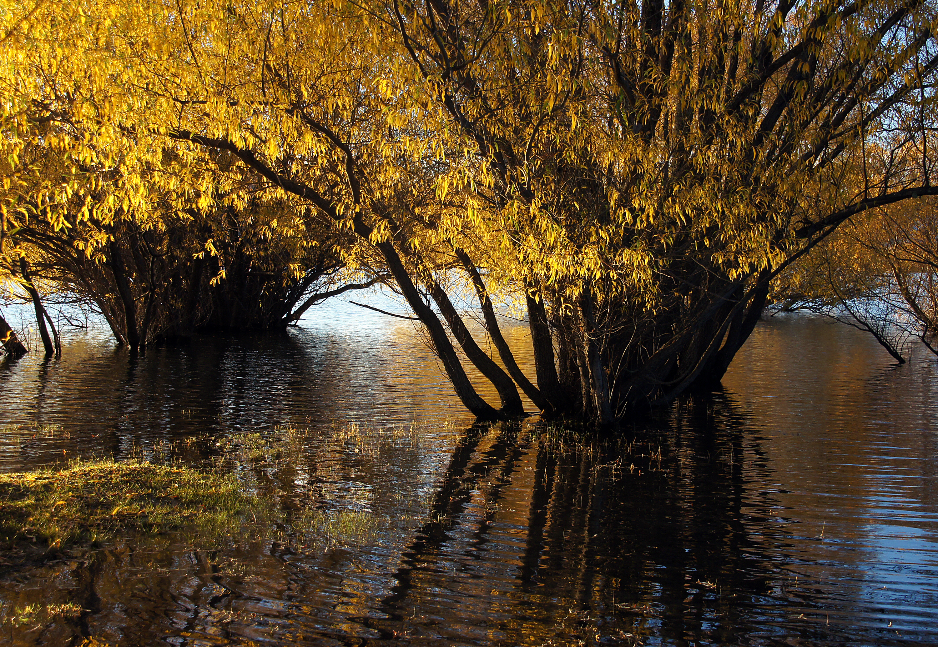 Autumn at lake tekapo nz (25) photo
