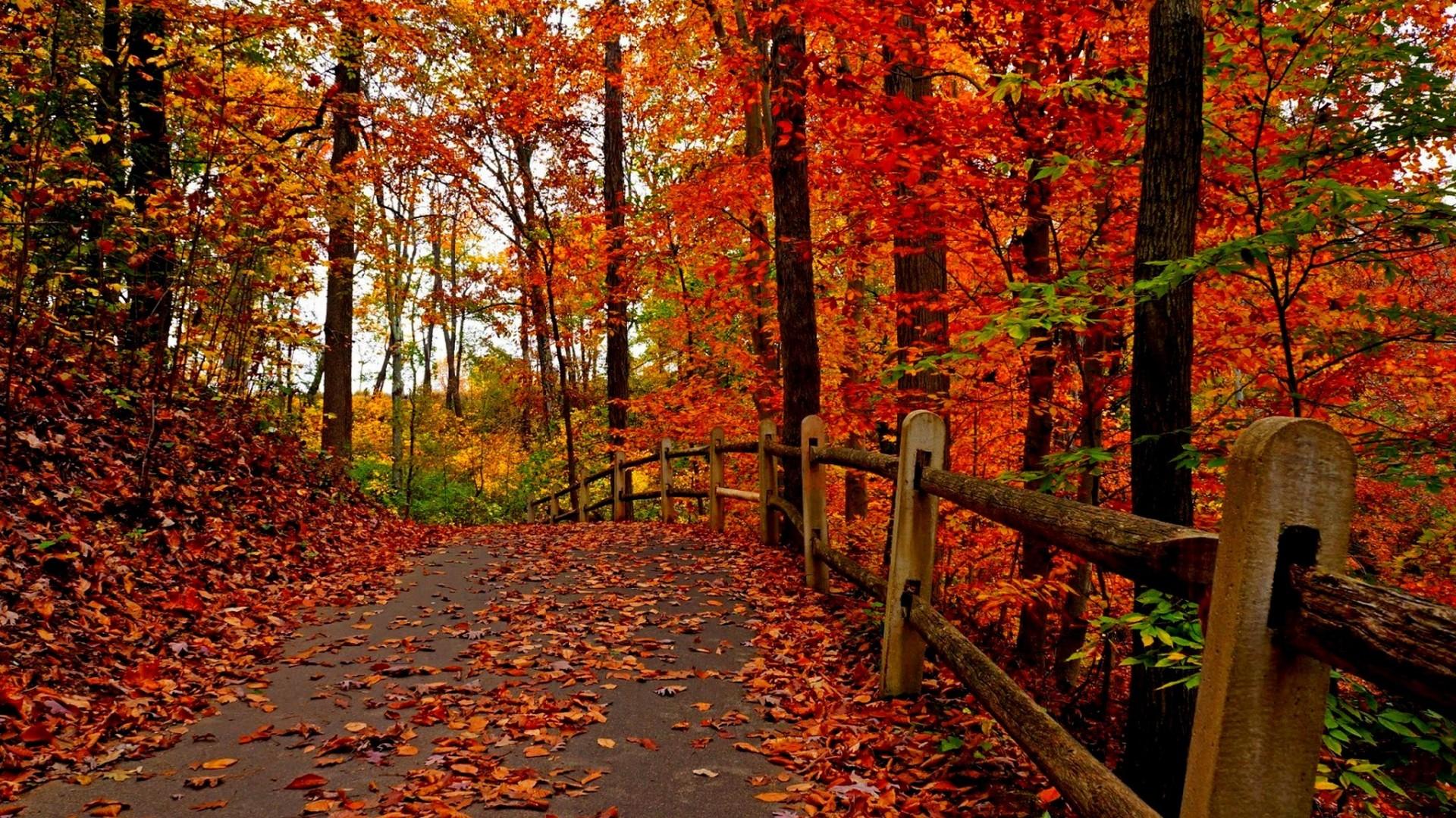 HD Autumn Beauty Way Wallpapers - HD Wallpapers - Desktop ...