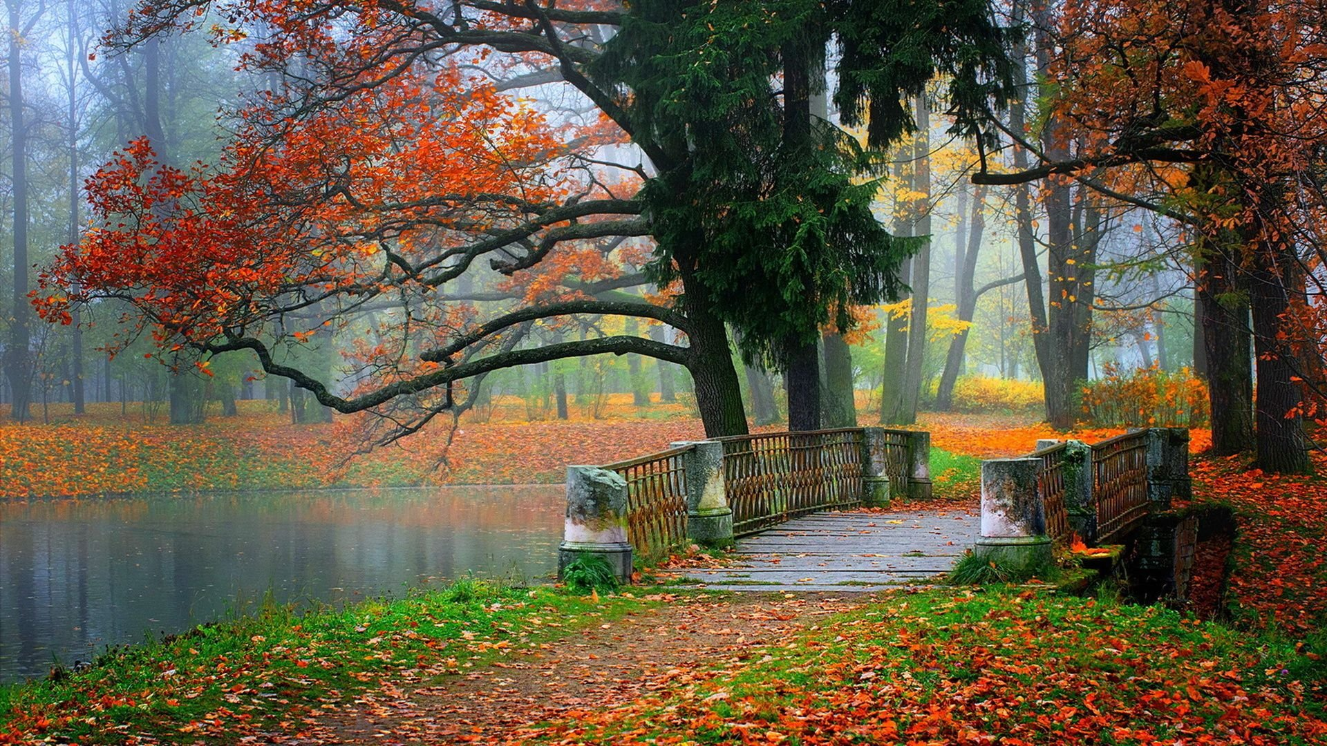 Autumn tree leaves beauty nature landscape lake bridge wallpaper ...