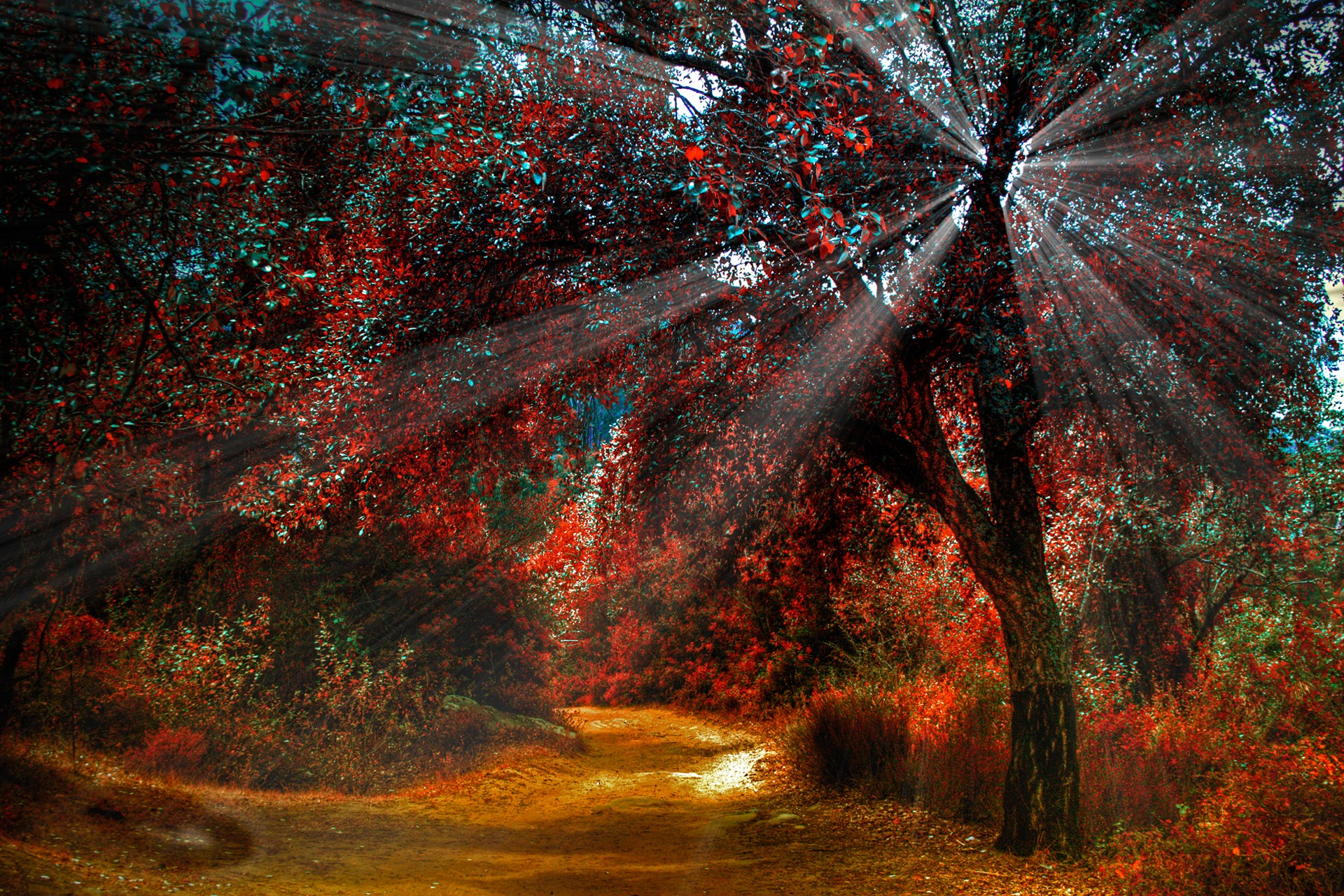 Forests: Autumn Red Fall Colorful Spotlight Beauty Natures Woods ...