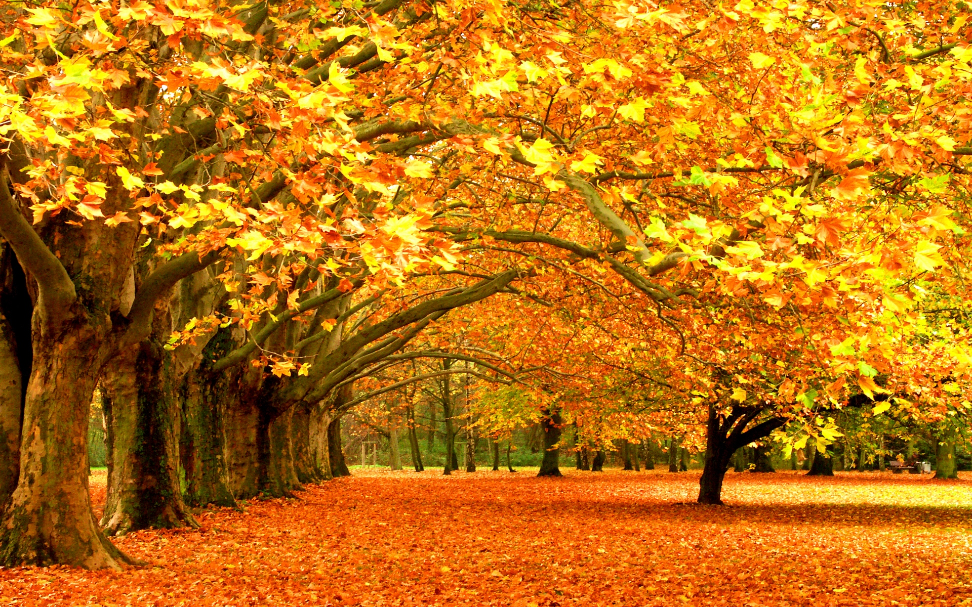 HD Autumn Tree Beauty Wallpapers - HD Wallpapers - Desktop ...